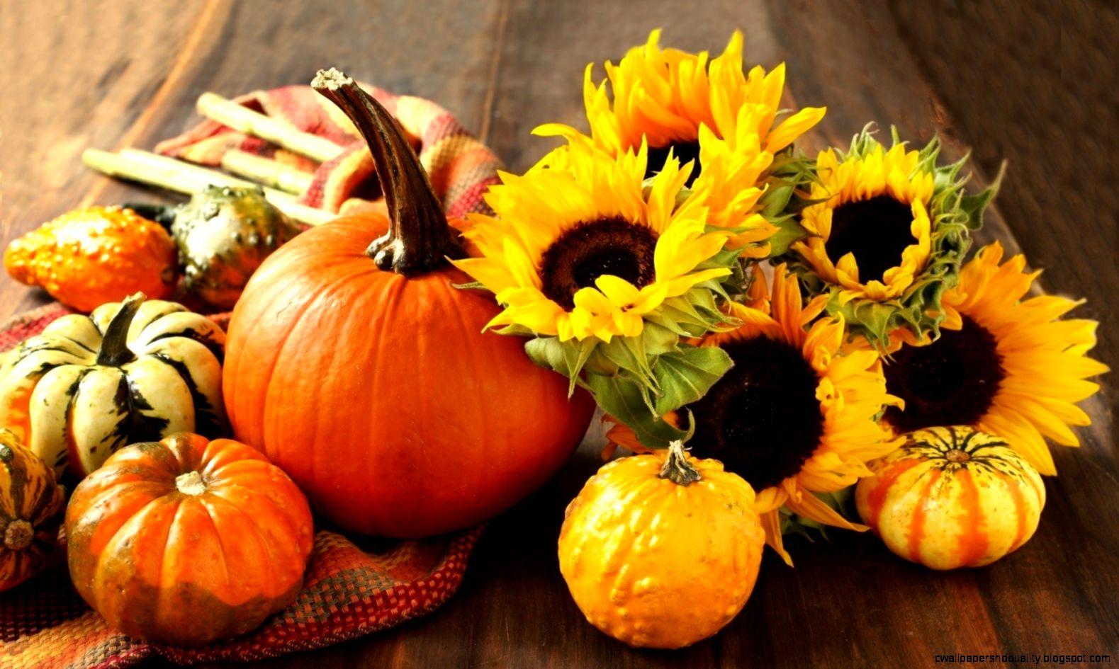 41 417363 hdq cover pumpkin hd wallpapers px fall pumpkin