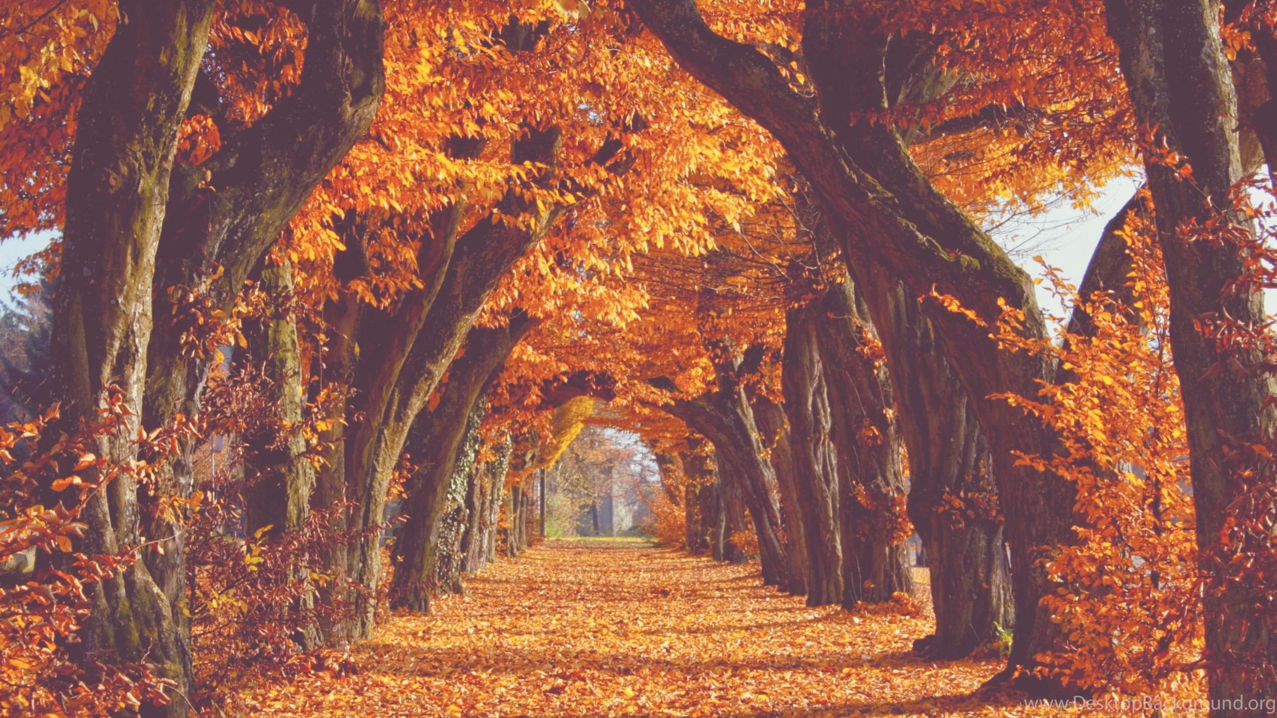 Fall Desktop Wallpaper Tumblr - Fall Background Tumblr Desktop - HD Wallpaper