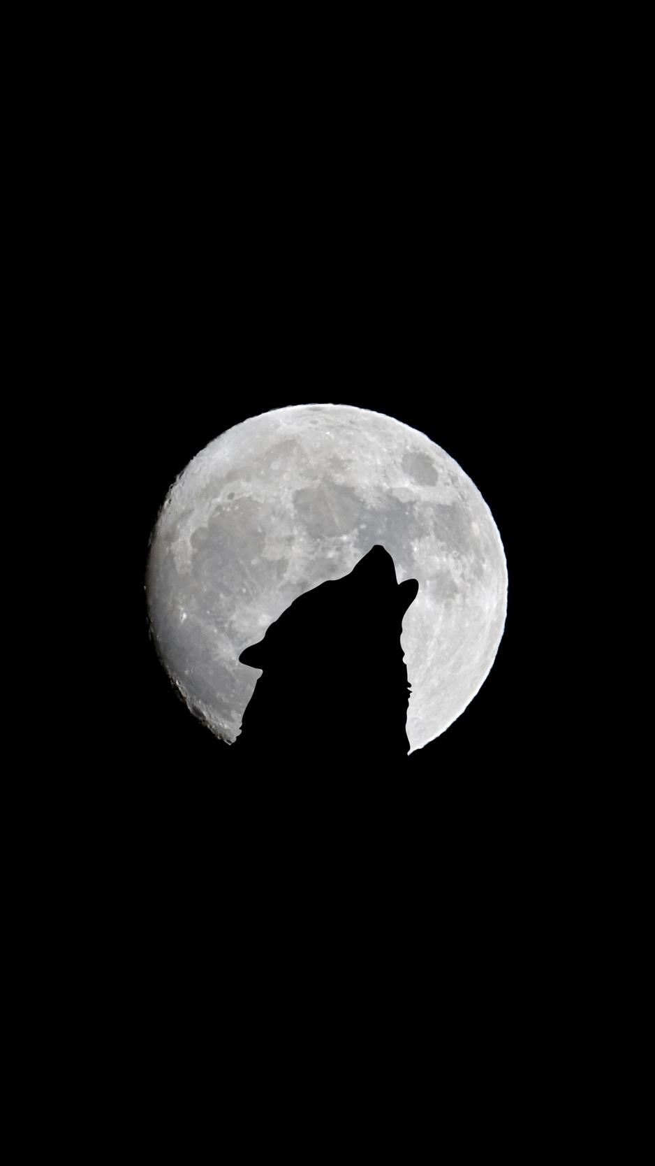 Wallpaper Full Moon Wolf Howl Bw Black Wolf With Galaxy Background 938x1668 Wallpaper Teahub Io