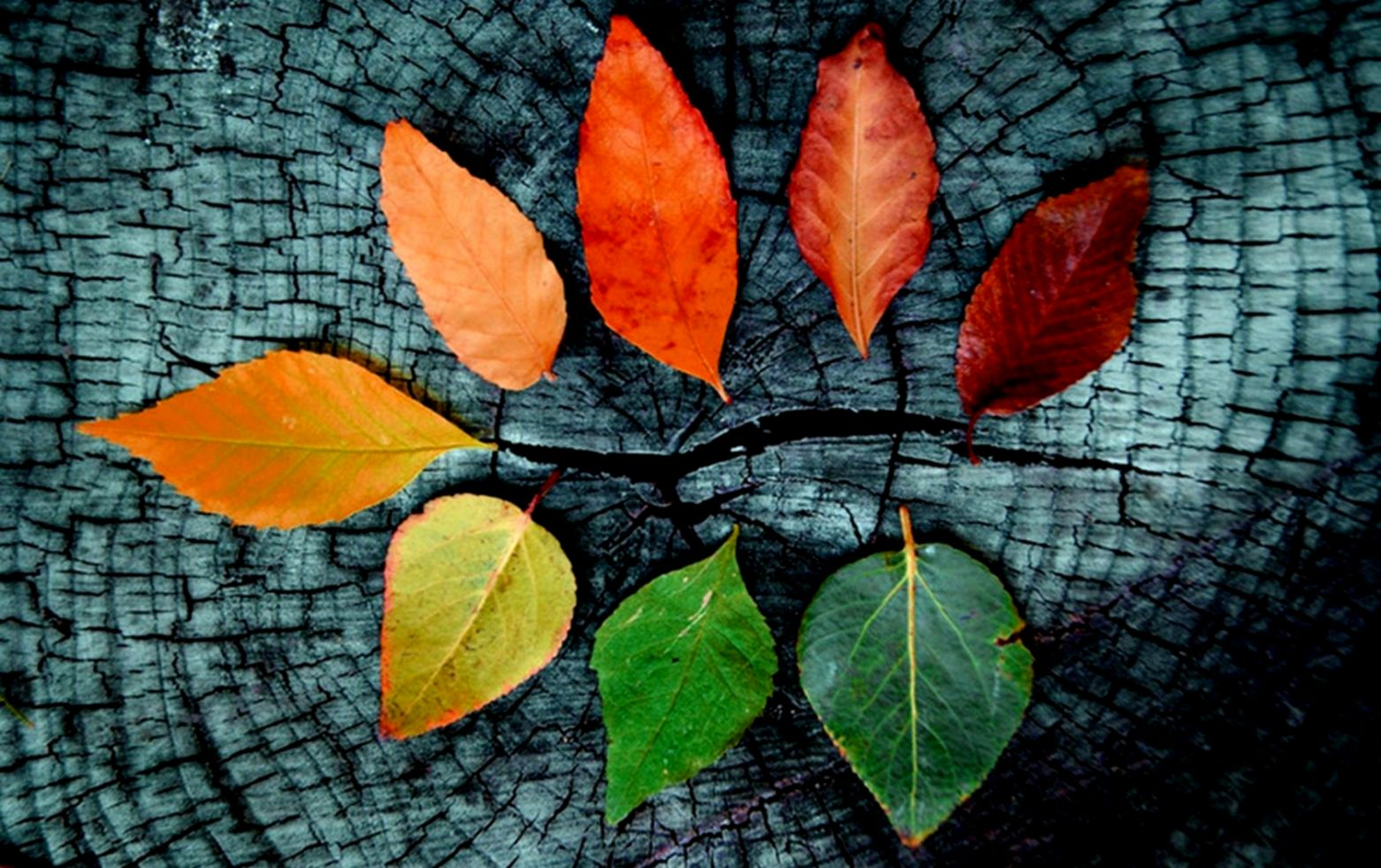 Other Autumn Tumblr Leafs Nature Fall Desktop Wallpapers - Fall Desktop Backgrounds - HD Wallpaper