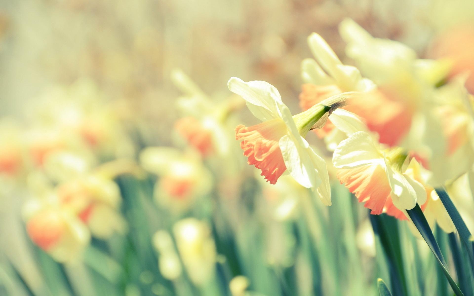 Cute Desktop Wallpaper Tumblr Image Photo Background - Cute Spring Desktop Backgrounds - HD Wallpaper