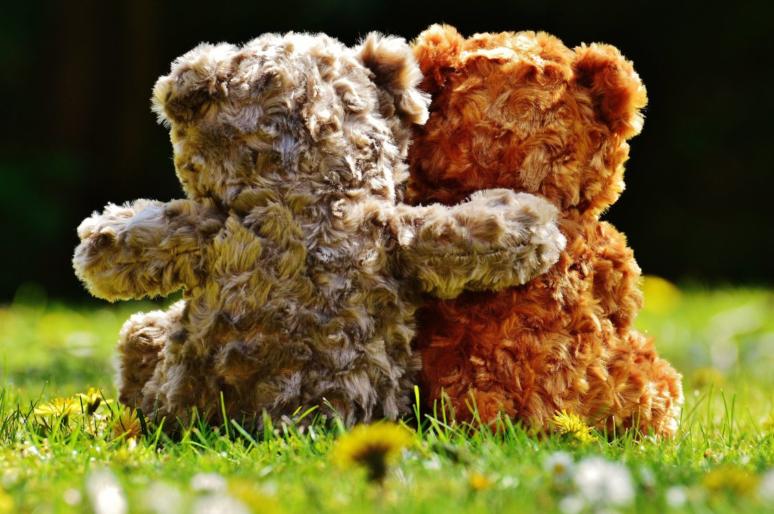 Download Wallpaper True Love Between Fluffy Bears - Love Romantic Teddy Day - HD Wallpaper