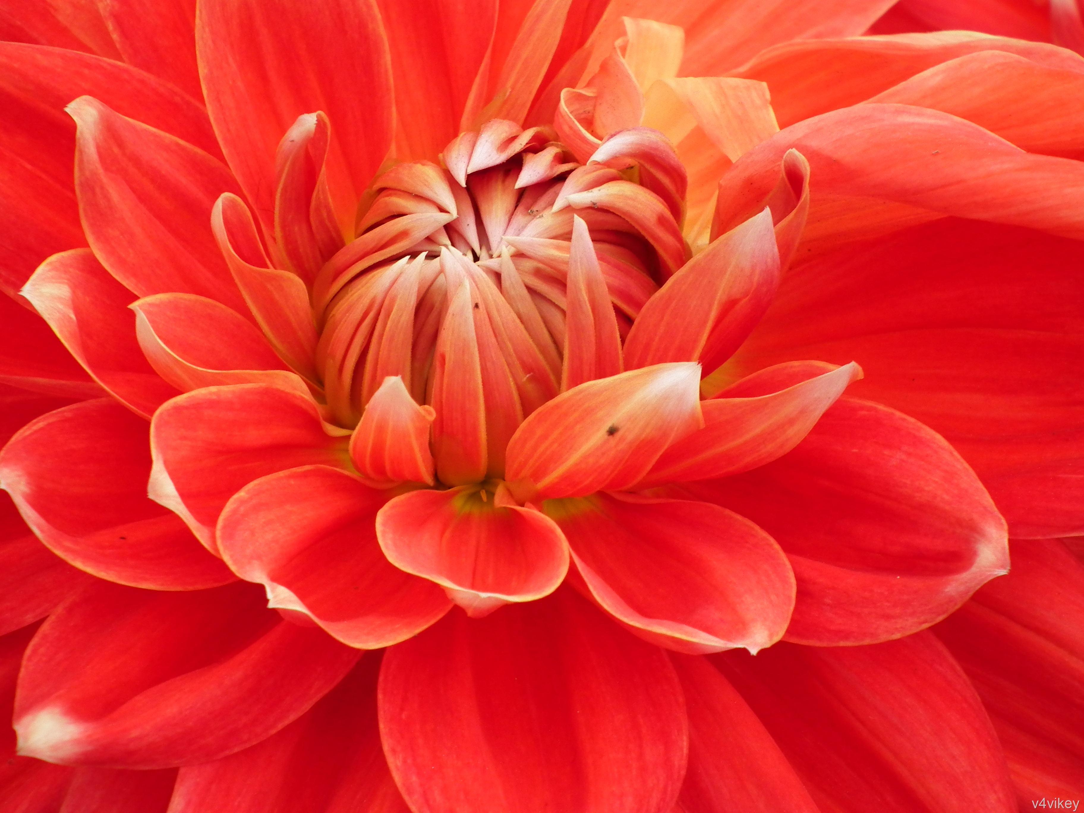 Beautiful Orange Color Flowers - HD Wallpaper