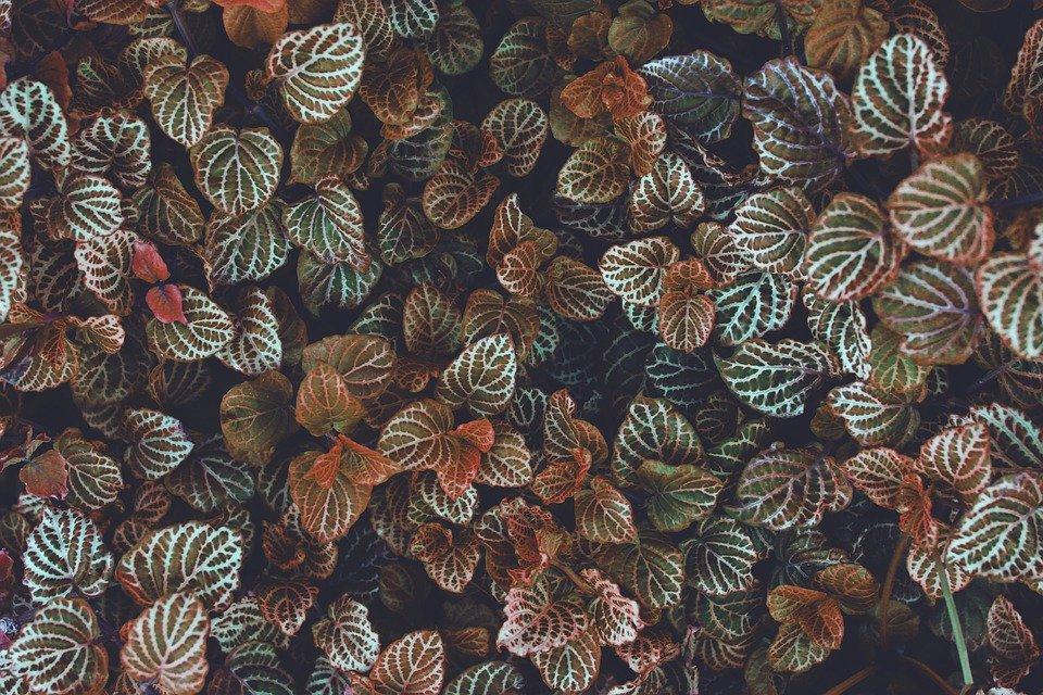44 442689 taman daun wallpaper gambar gratis musim gugur fondo