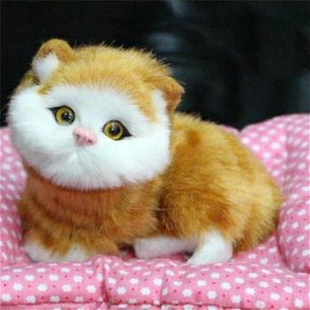 Kucing Lucu Bergerak Dan Bersuara 1000x1000 Wallpaper Teahub Io