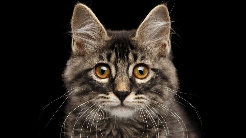 Gambar Kucing - HD Wallpaper