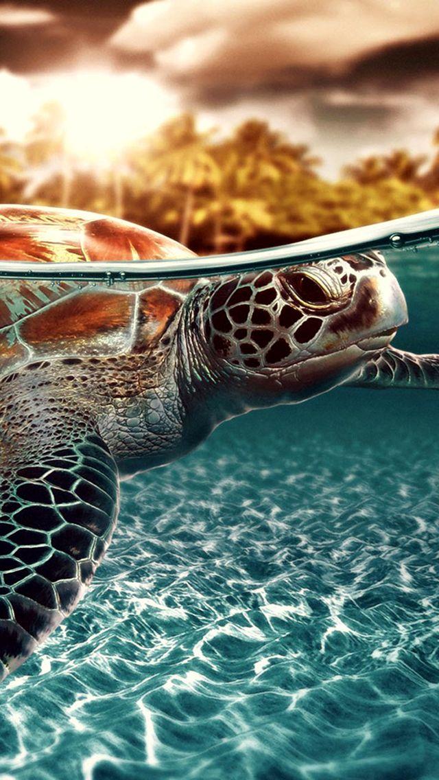 Sea Turtles Wallpaper For Iphone 640x1136 Wallpaper Teahub Io