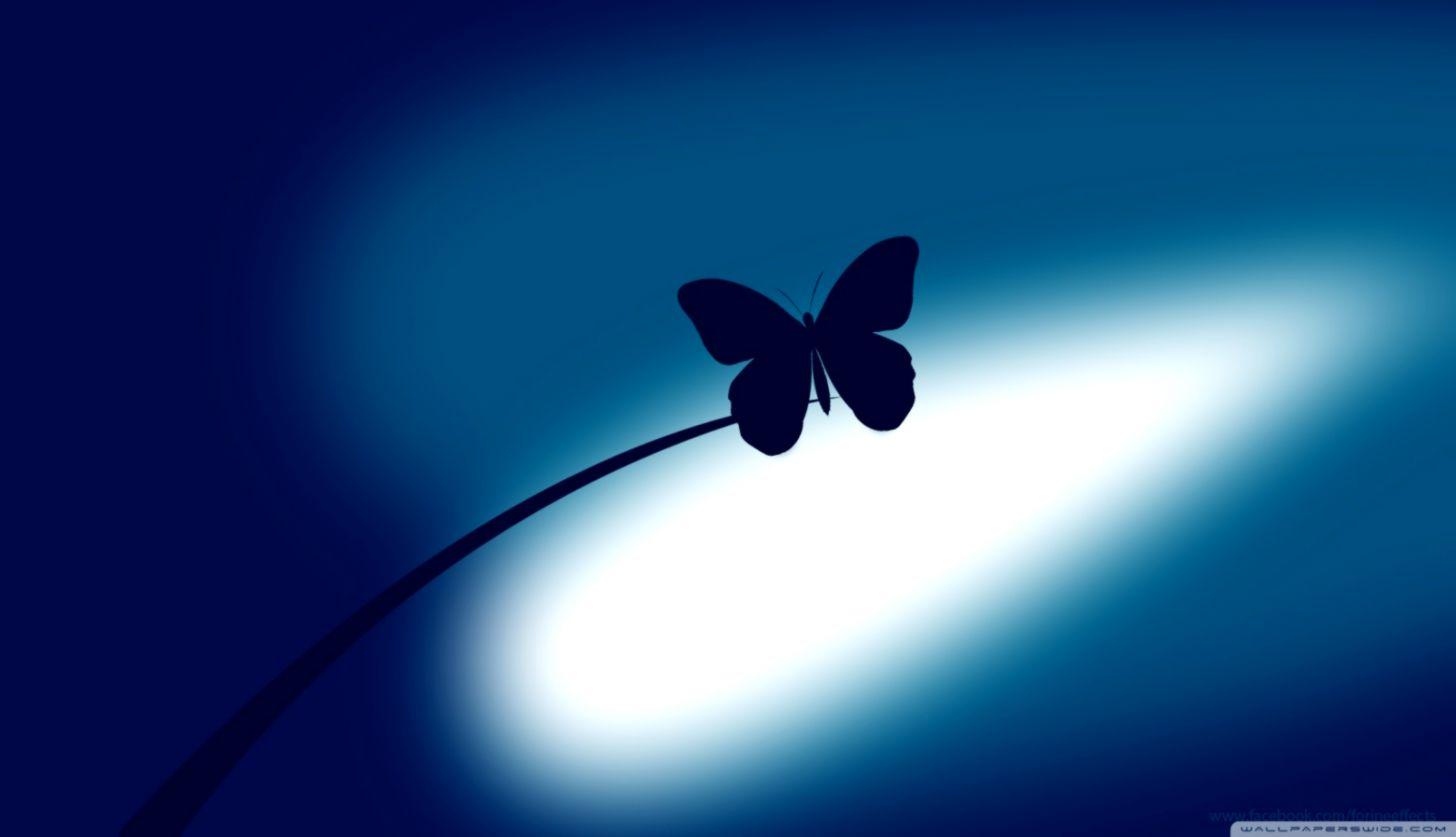 Blue Butterfly 4k Hd Desktop Wallpaper For 4k Ultra 4k Ultra Hd Butterfly 1456x837 Wallpaper Teahub Io