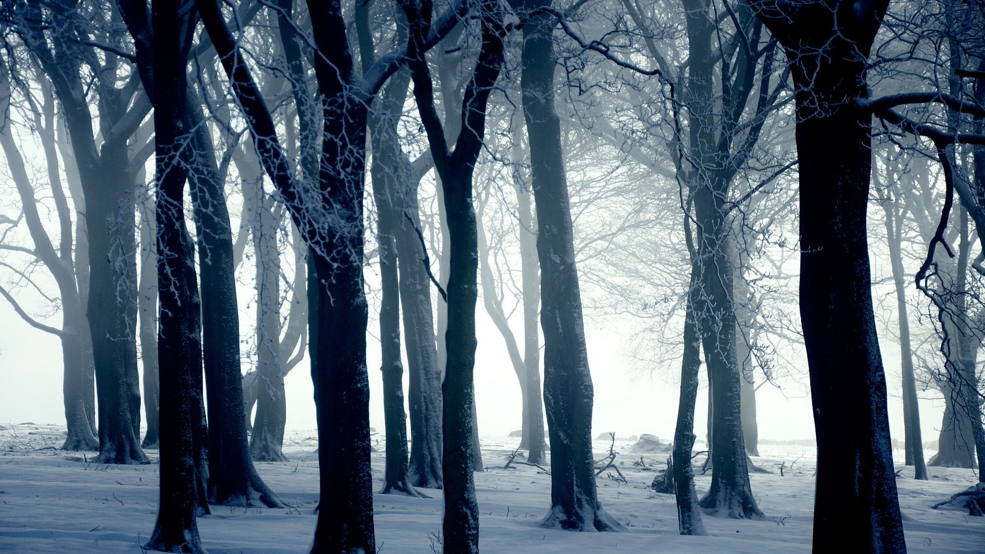 1920x1080, Silhouettes Of Trees In Winter Forest   - Forest Trees Winter - HD Wallpaper