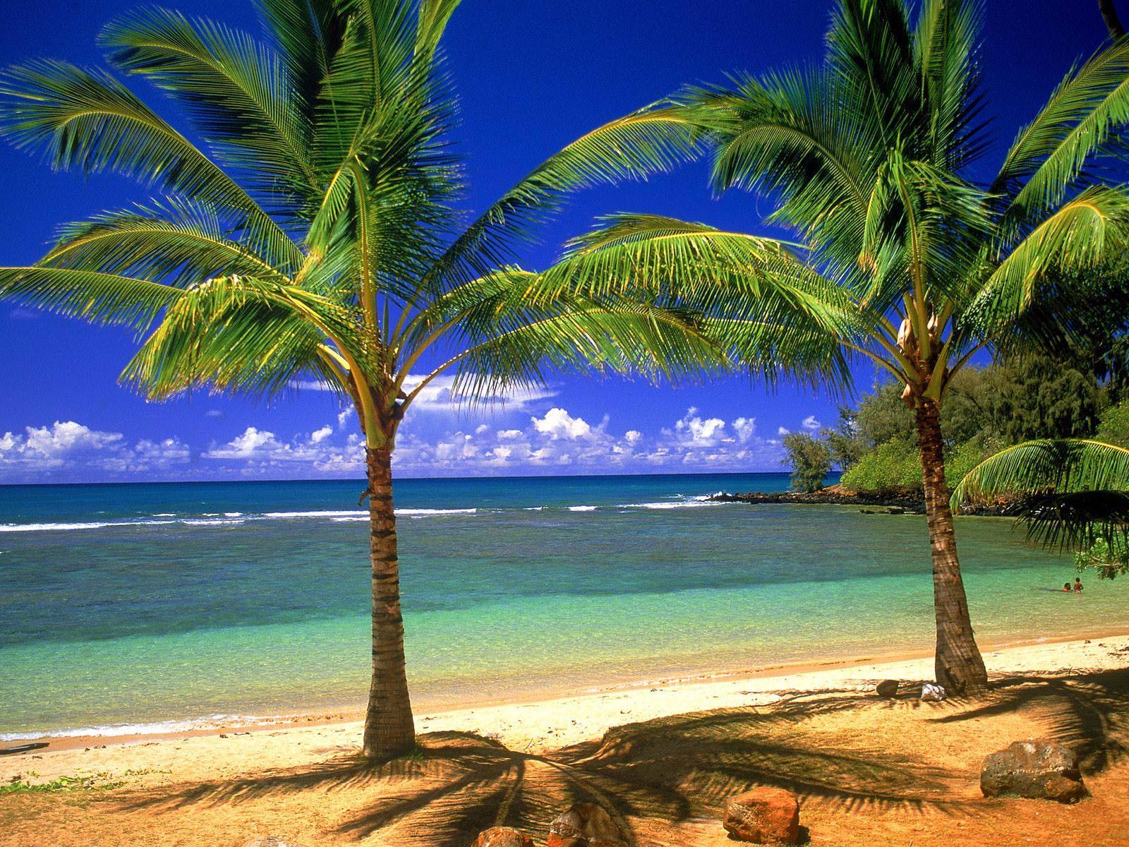 Tropical Beach Scene Wallpaper 1 - Beach And Palm Tree - HD Wallpaper
