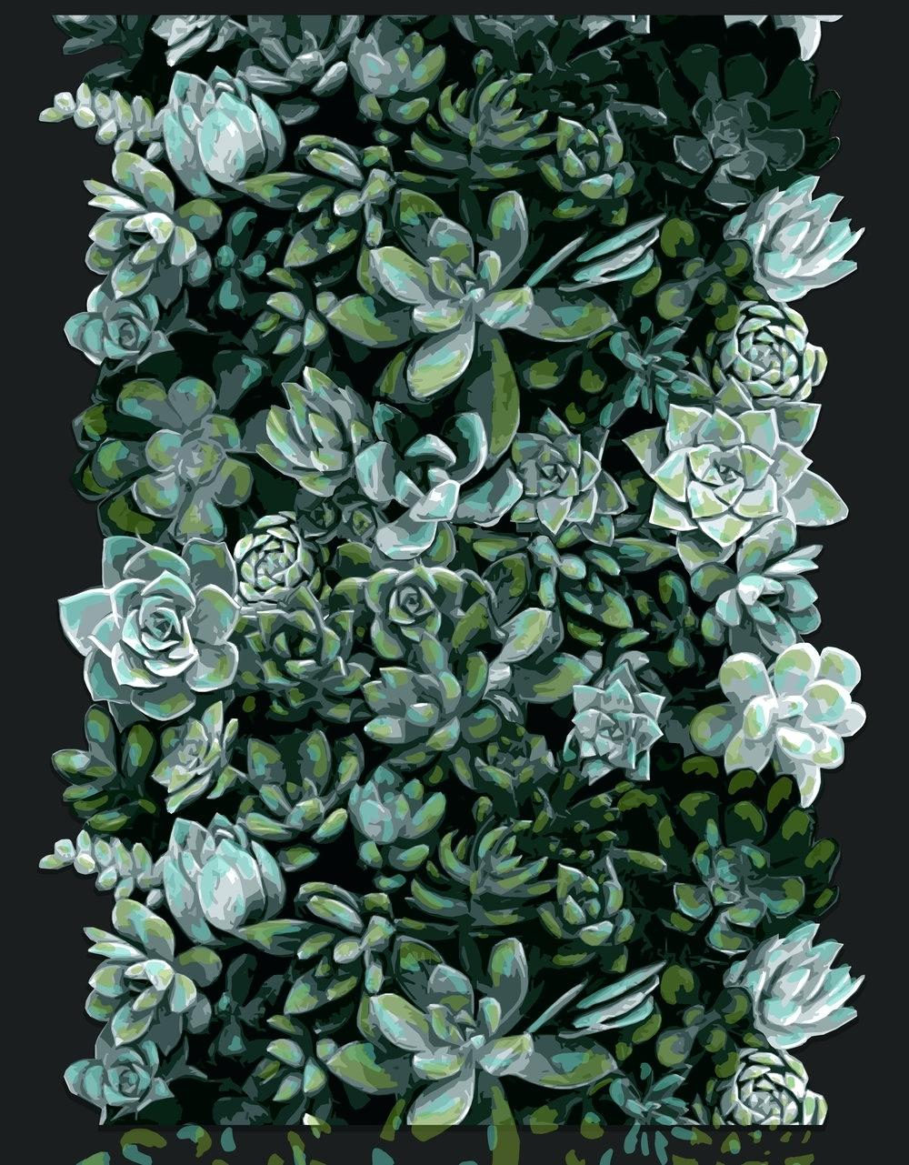 Succulent Phone Wallpapers Phone Backgrounds Succulents 1000x1281 Wallpaper Teahub Io