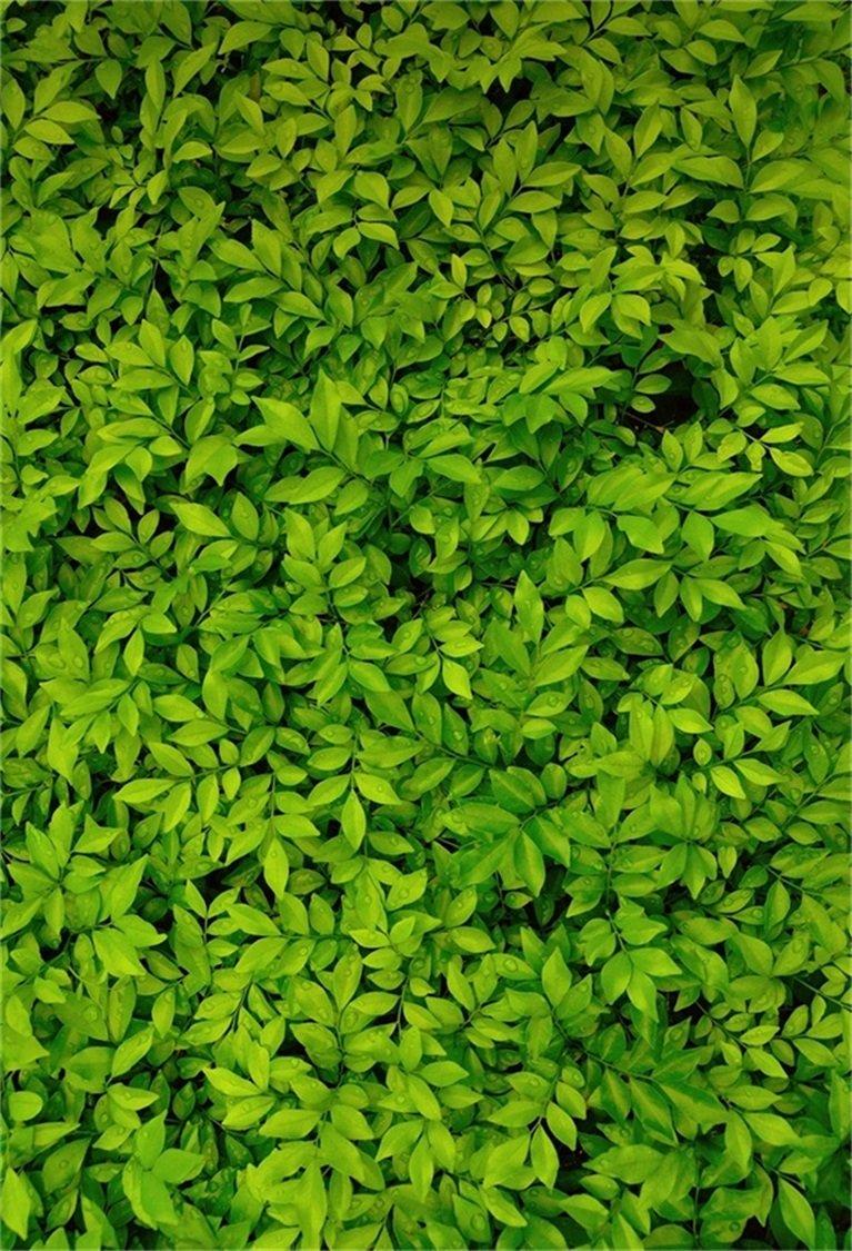 Nature Green Background Portrait - HD Wallpaper