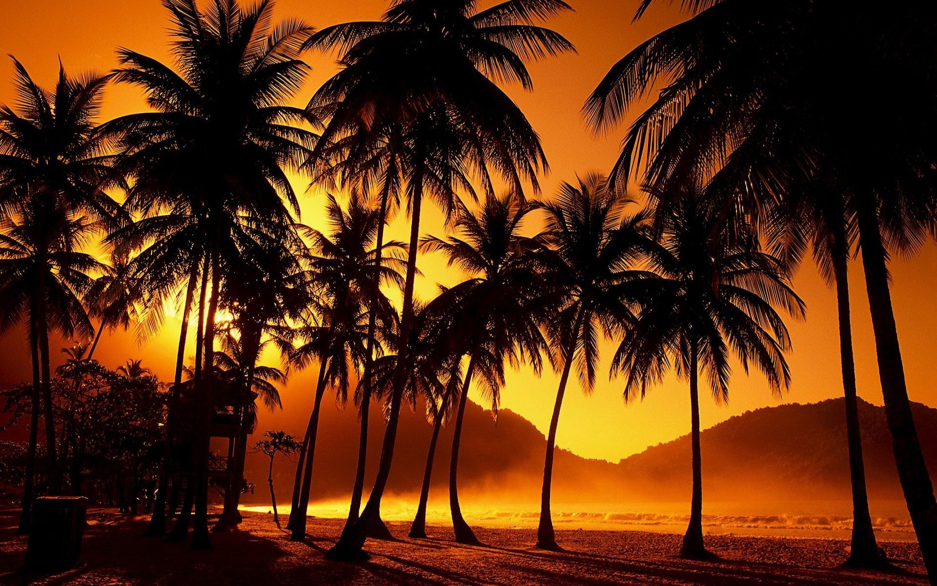 Sunset Wall Mural From Scarfacesunset Palm Trees Wallpaper - I M Sorry Forgive Me Thank You I Love You - HD Wallpaper