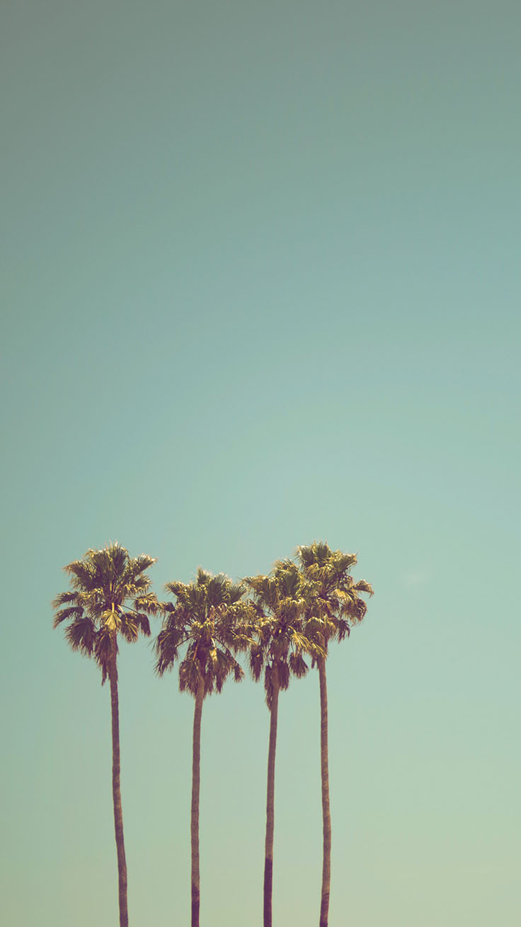 Palm Tree Iphone Wallpaper Collection By Www - Palm Tree Wallpaper Hd - HD Wallpaper