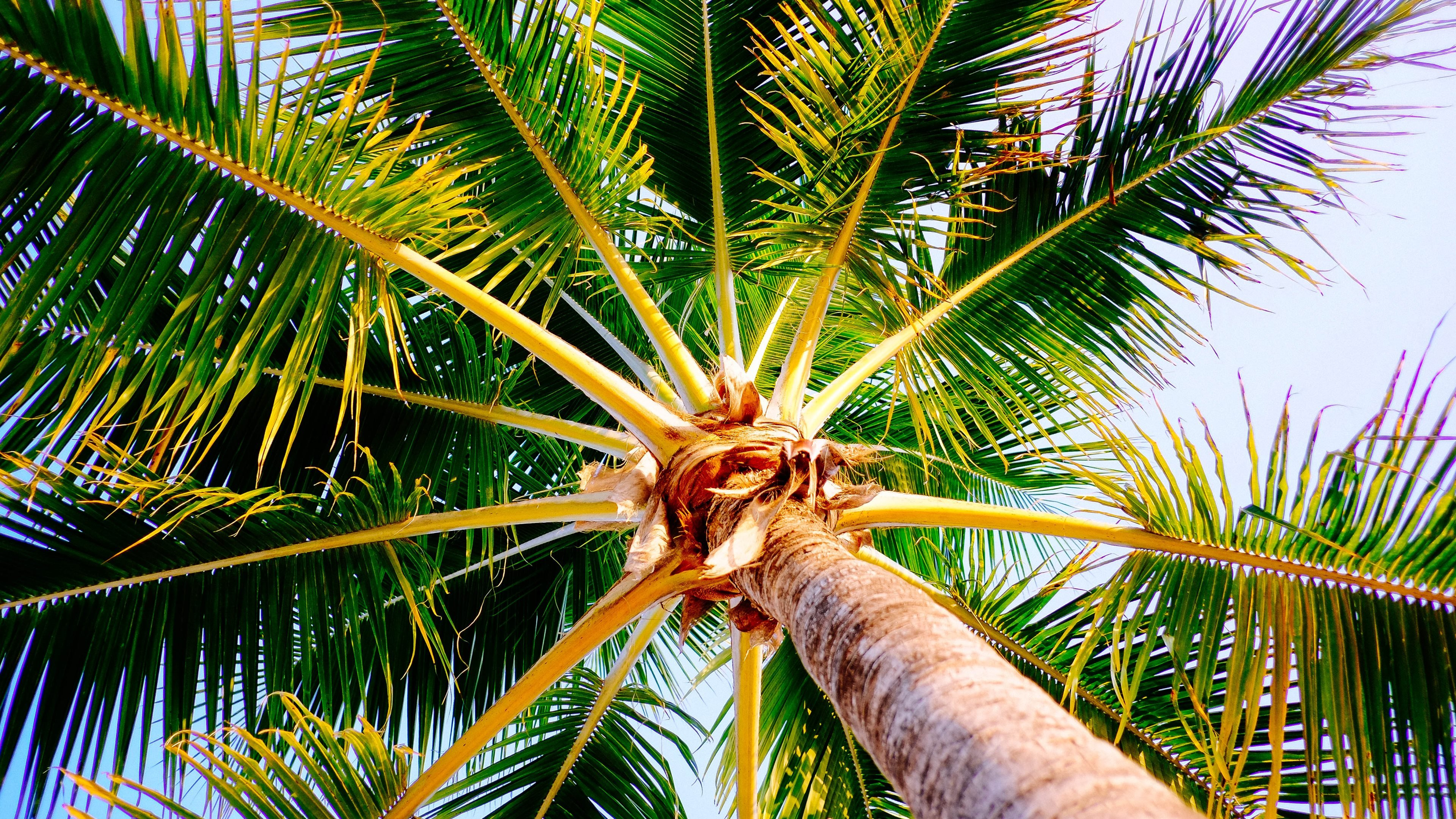 Best Palm Tree Wallpaper Id - Palm Trees Wallpapers Iphone - HD Wallpaper