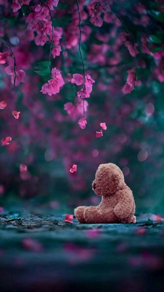 Iphone Teddy Bear Wallpaper Hd 540x960 Wallpaper Teahub Io