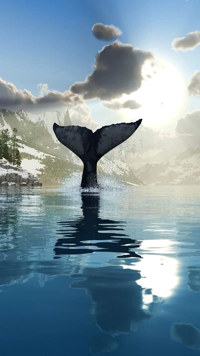 Whale Wallpaper Humpback Whale Wallpaper Ocean Whale Whale Tail Wallpaper Iphone 640x1136 Wallpaper Teahub Io