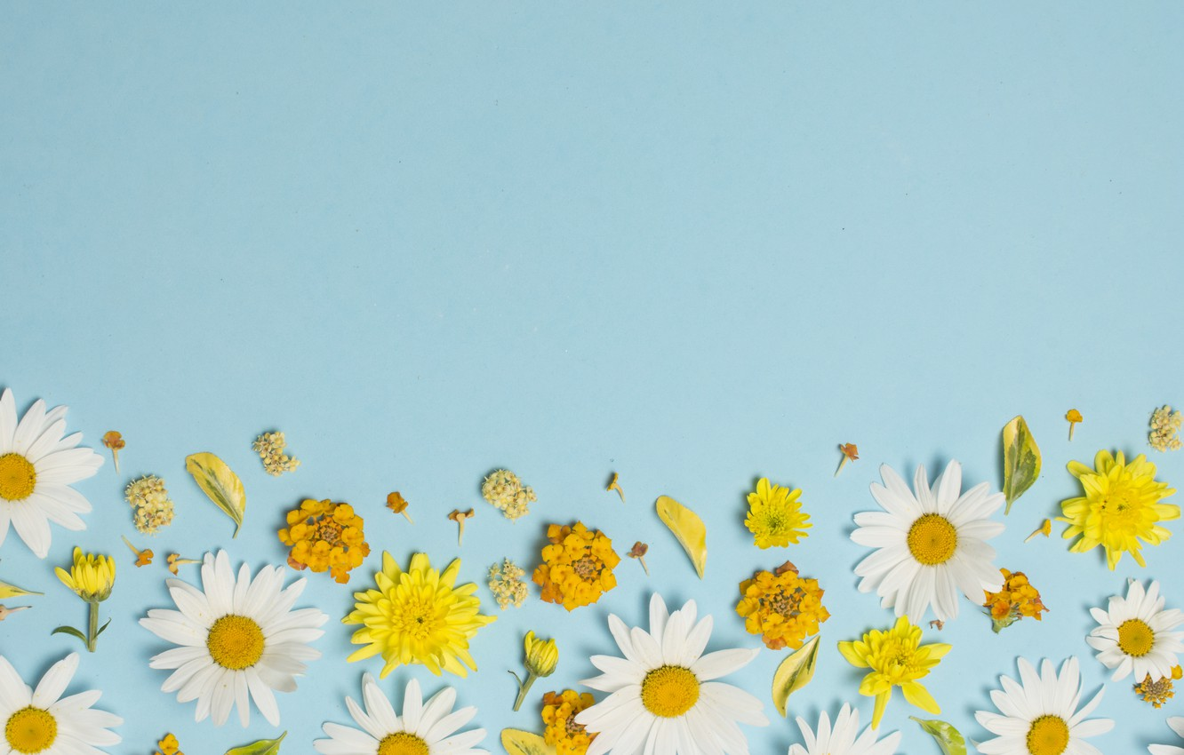 photo wallpaper flowers chamomile white yellow yellow flower background for computer 1332x850 wallpaper teahub io photo wallpaper flowers chamomile