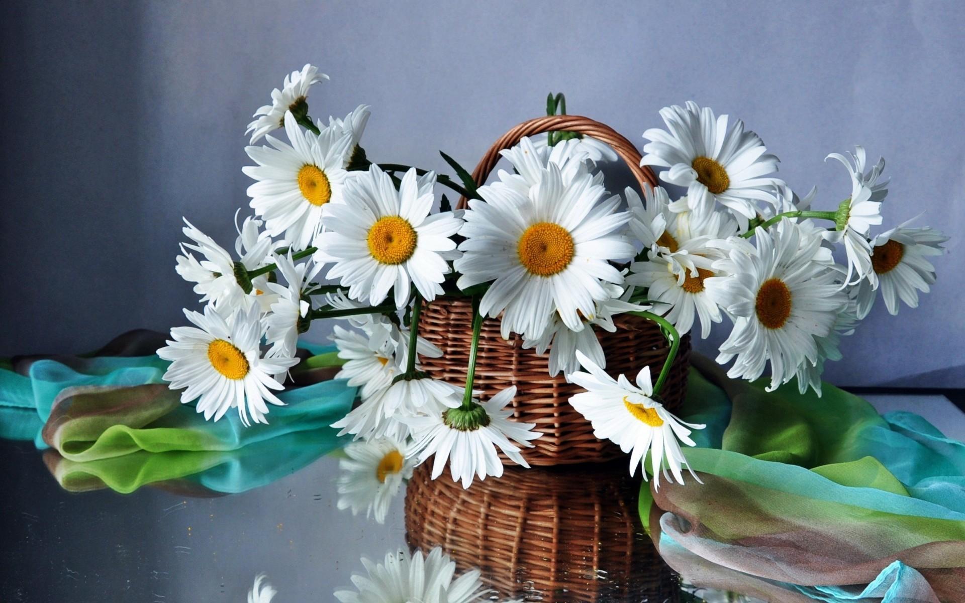 Mobile Wallpaper Life, Basket,daisies, Beautiful, Flower - Love Flower Love Wallpaper Beautiful - HD Wallpaper