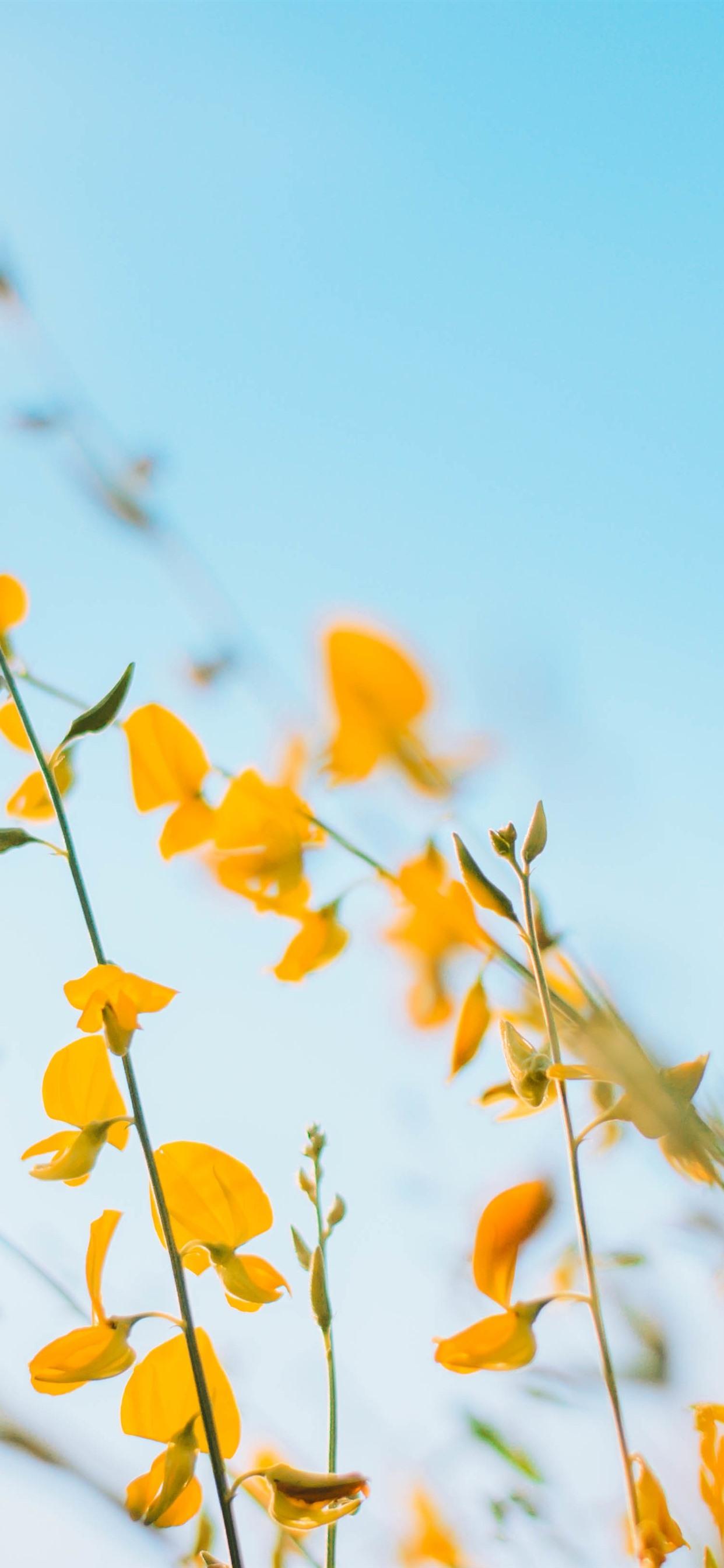 iphone yellow flower background 1242x2688 wallpaper teahub io teahub io