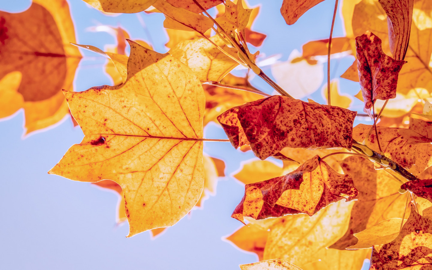 Best Autumn Leaves Wallpaper - Nature Leaves Colorful - HD Wallpaper