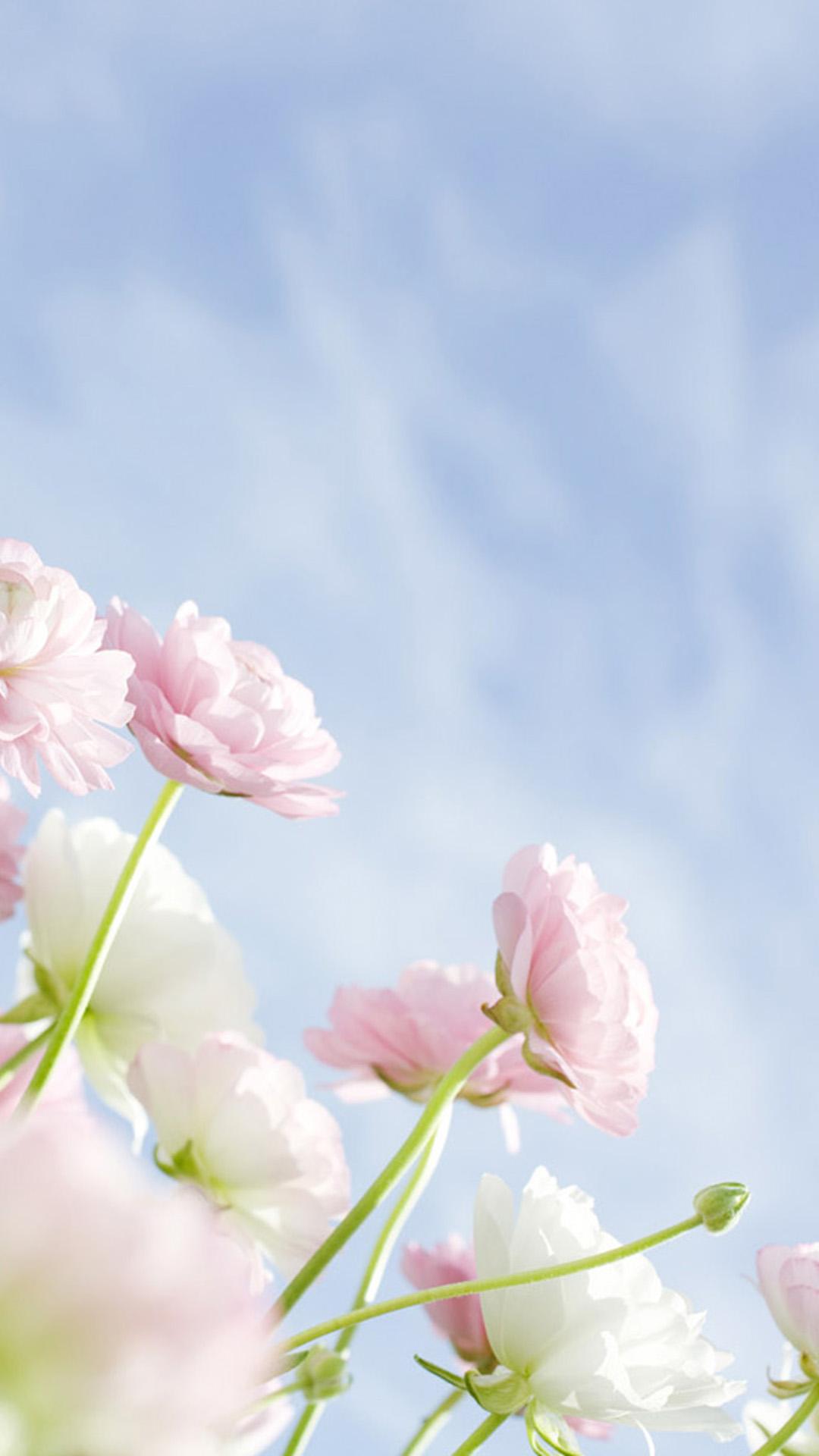 Elegant Flowers Galaxy S5 Wallpapers Samsung Galaxy - Samsung S5 Wallpaper Flower - HD Wallpaper