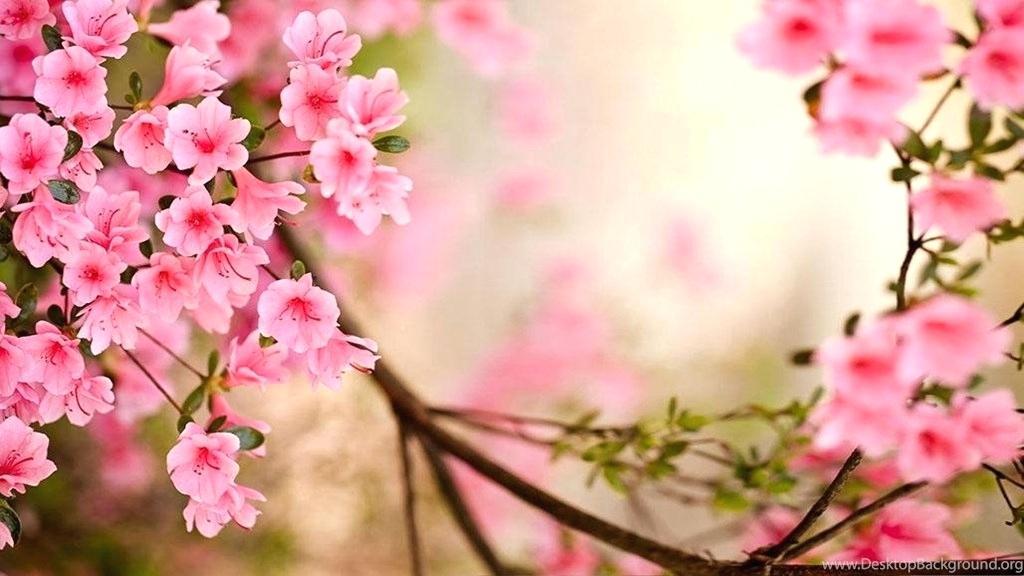 Hd Flowers Wallpaper Flowers Wallpapers For Desktop Season Wallpaper Spring 1024x576 Wallpaper Teahub Io
