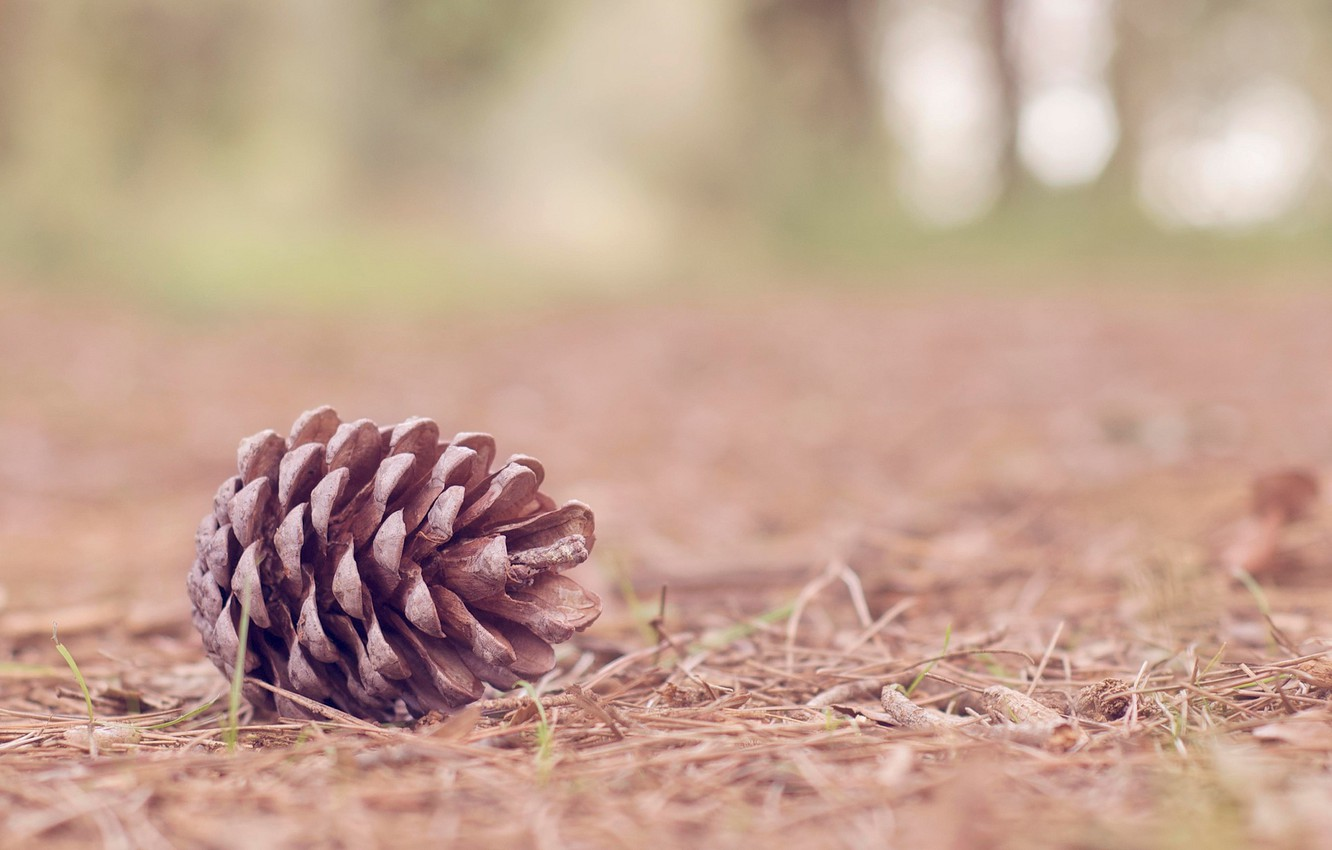 Photo Wallpaper Nature, Background, Tree, Widescreen, - Pinecone In Nature - HD Wallpaper