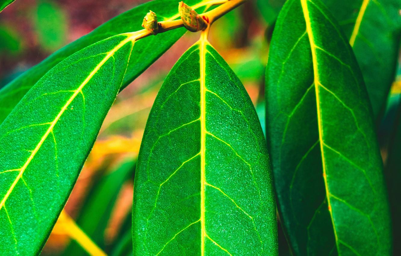Photo Wallpaper Green, Nature, Leaves, Macro, Blur, - Green Leaves Hd - HD Wallpaper