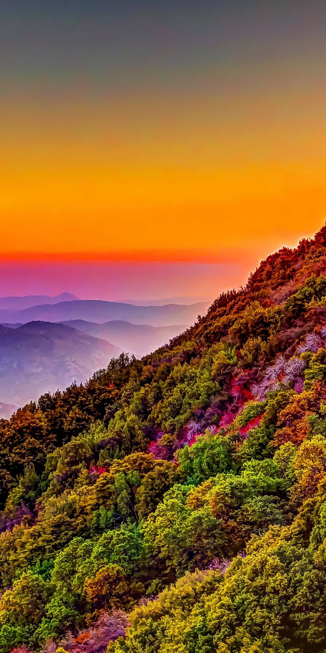 Mountain, Colorful, Forest, Nature, Sunset, Scenery, - Colorful Wallpaper Iphone 11 - HD Wallpaper