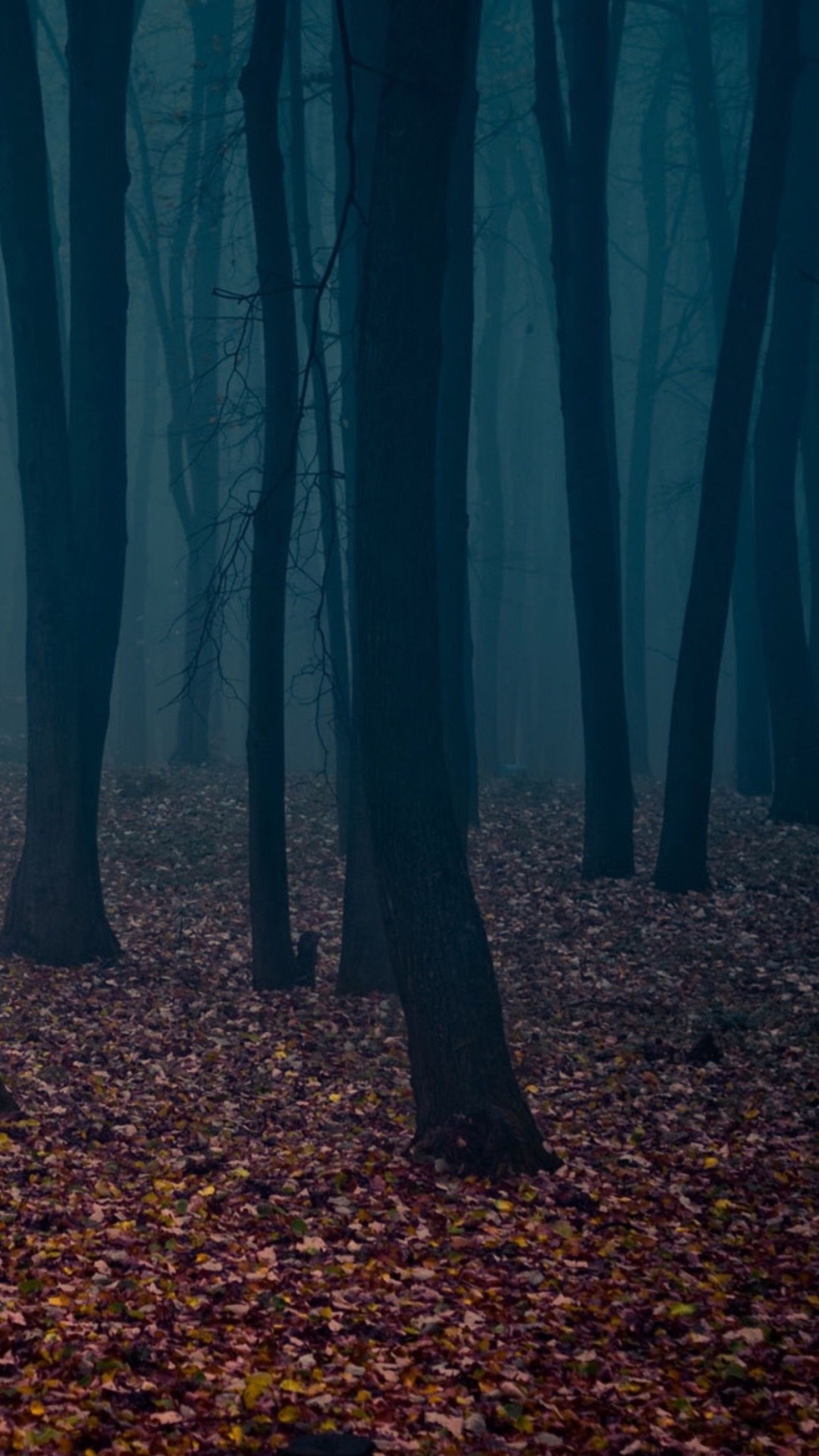 Spooky Autumn Forest Leafbed Iphone 6 Plus Hd Wallpaper - Spooky Wallpapers For Phone - HD Wallpaper