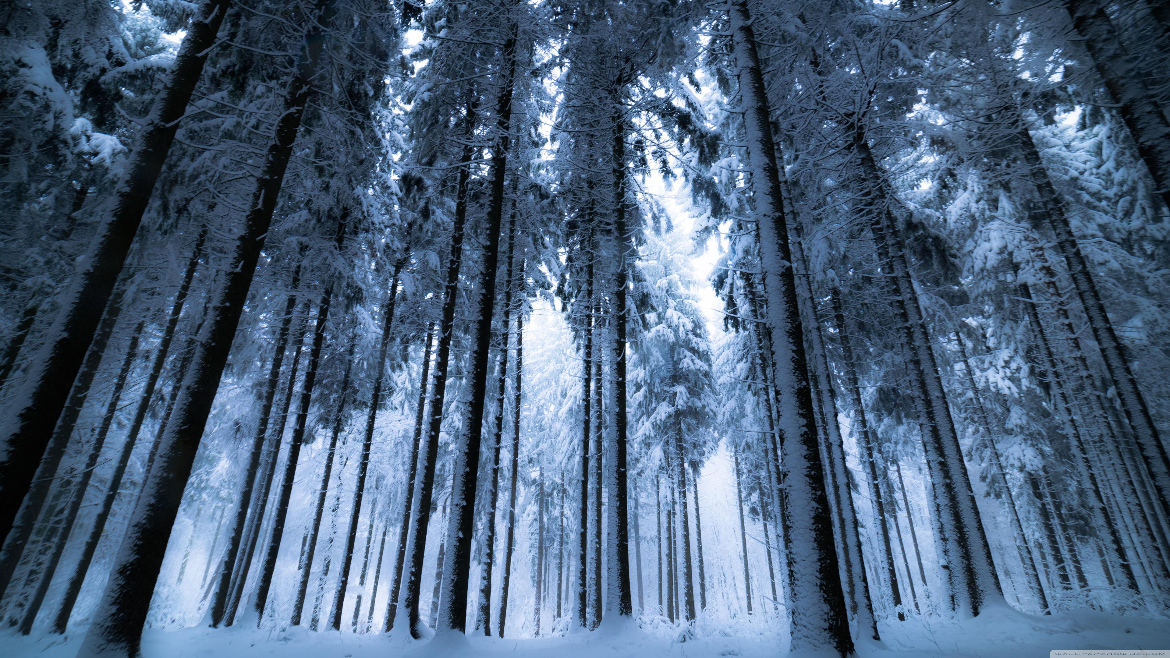 Dark Winter Forest Wallpaper Hd Resolution Winter Forest Wallpaper 4k 3840x2160 Wallpaper Teahub Io