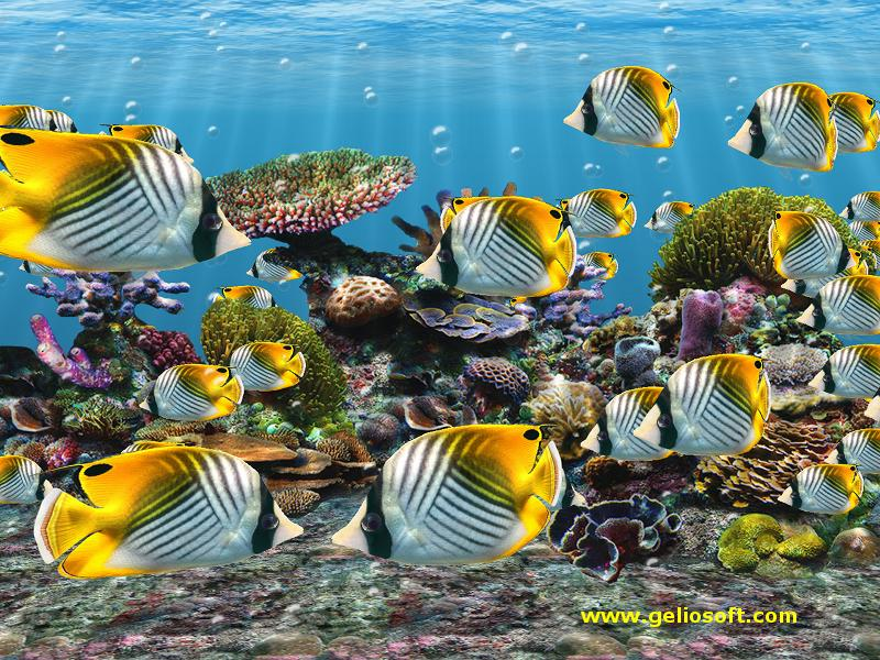 3d Fish Tank Backgrounds Pc, Android, Iphone And Ipad - School Of Butterfly Fish - HD Wallpaper