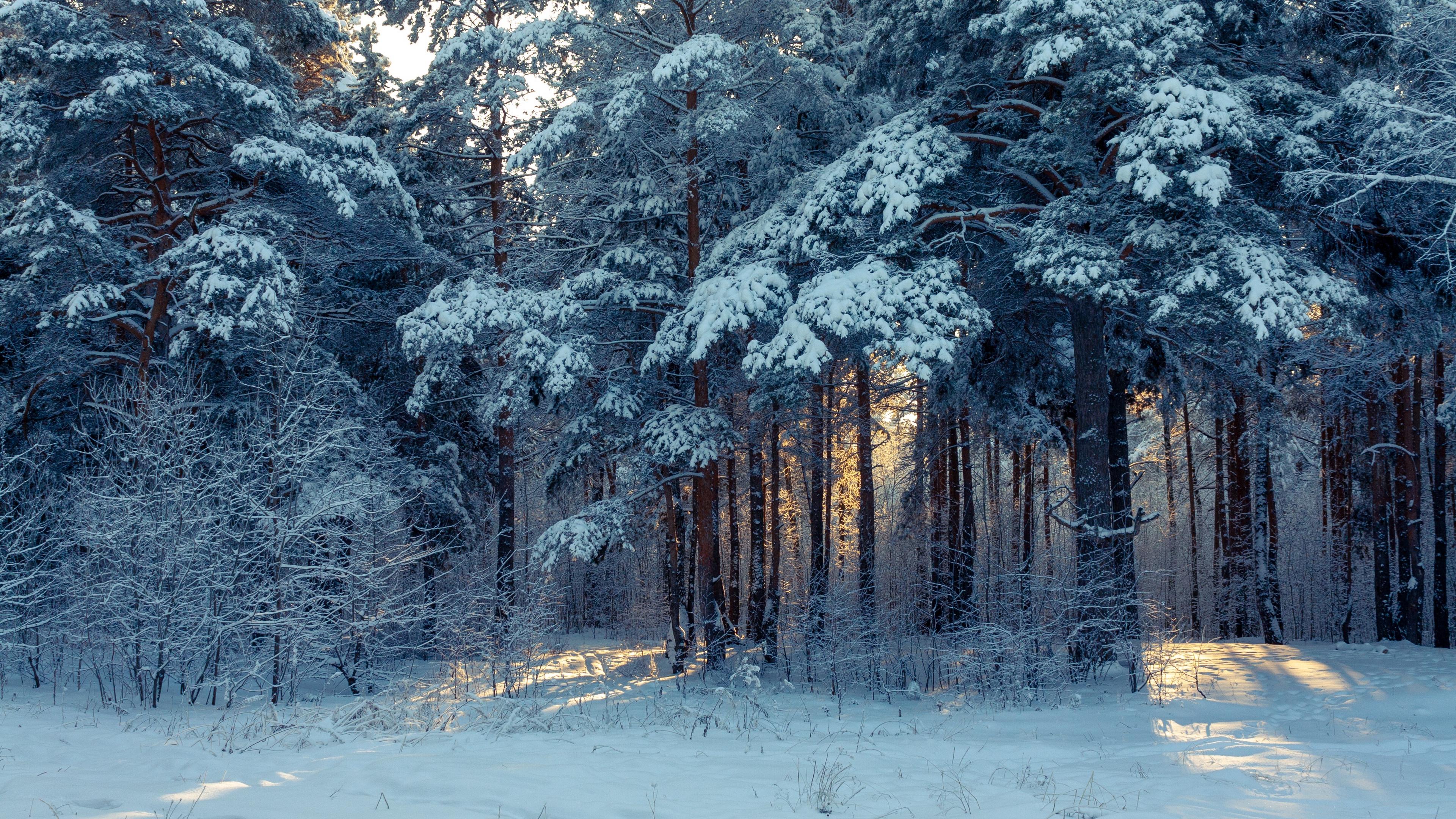 Wallpaper Forest, Winter, Snow, Trees, Winter Landscape - Winter Landscape Wallpaper 4k - HD Wallpaper