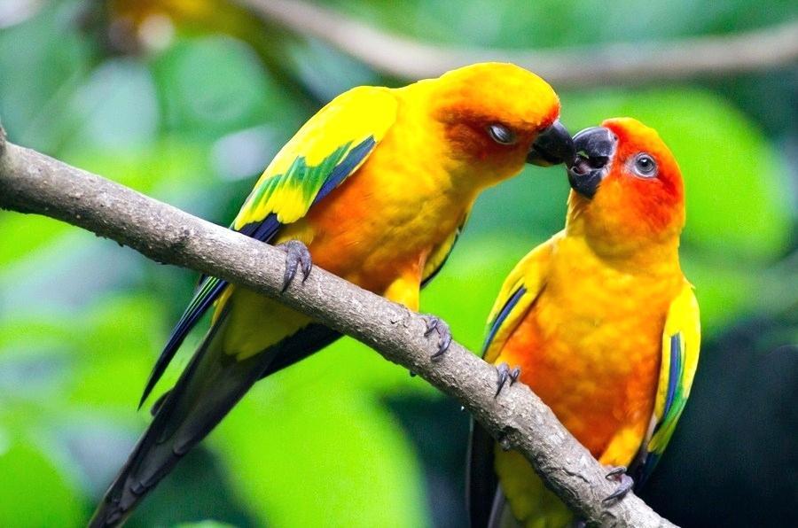 Birds Wallpaper Beautiful Love Birds Wallpapers Birds - Free Download Love Birds - HD Wallpaper