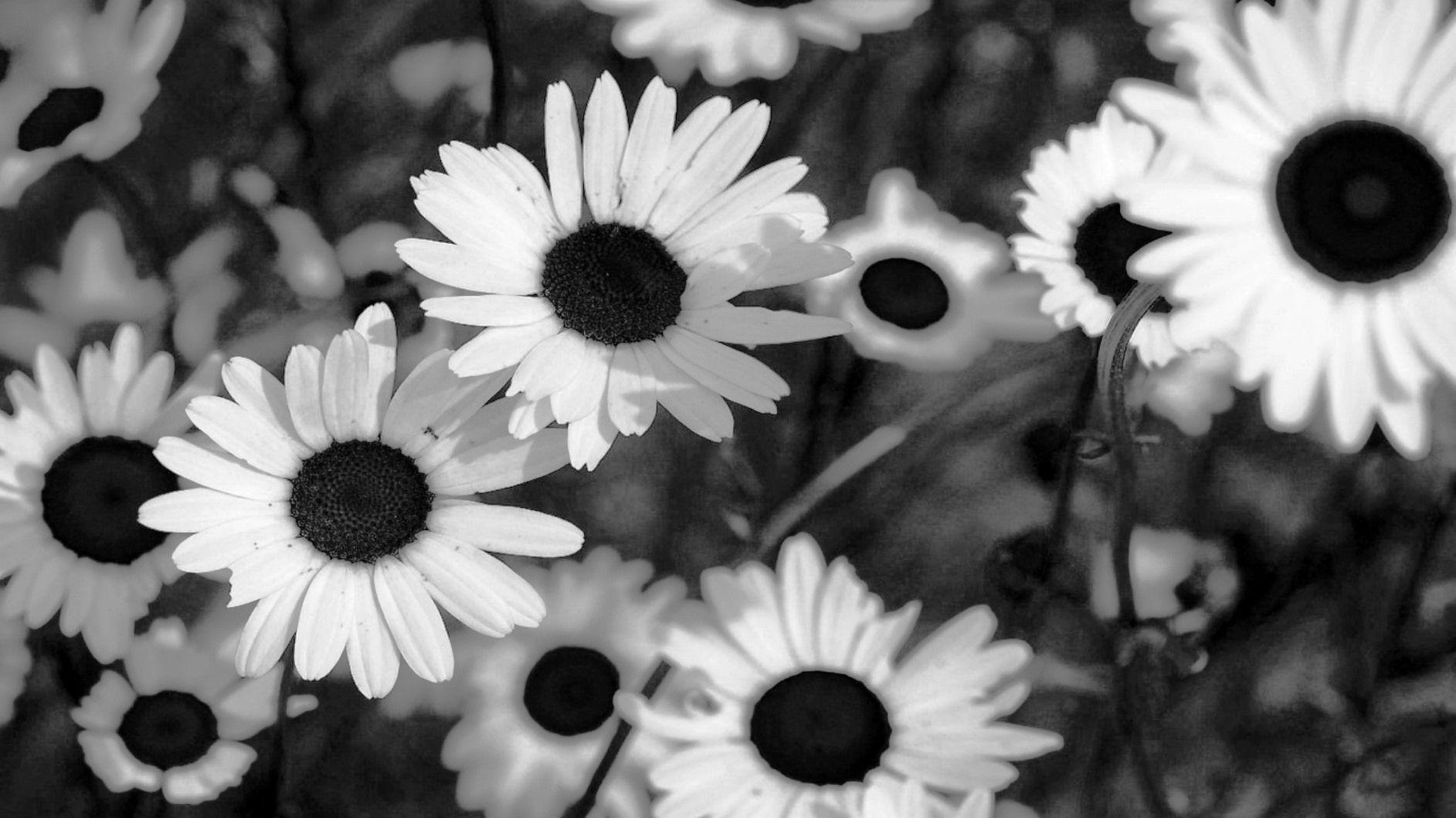Tumblr Wallpapers Black And White Flowers E2 80 93 Background Rose Flower Black 1885x1060 Wallpaper Teahub Io