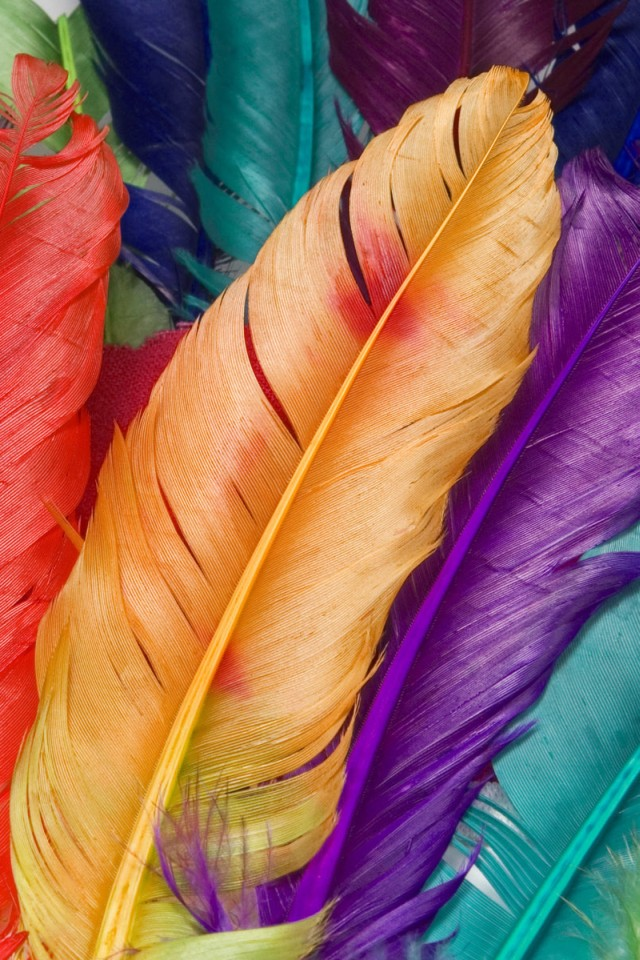 Hd Colorful Feather Iphone 4 Wallpapers - Colorful Wallpaper Iphone - HD Wallpaper
