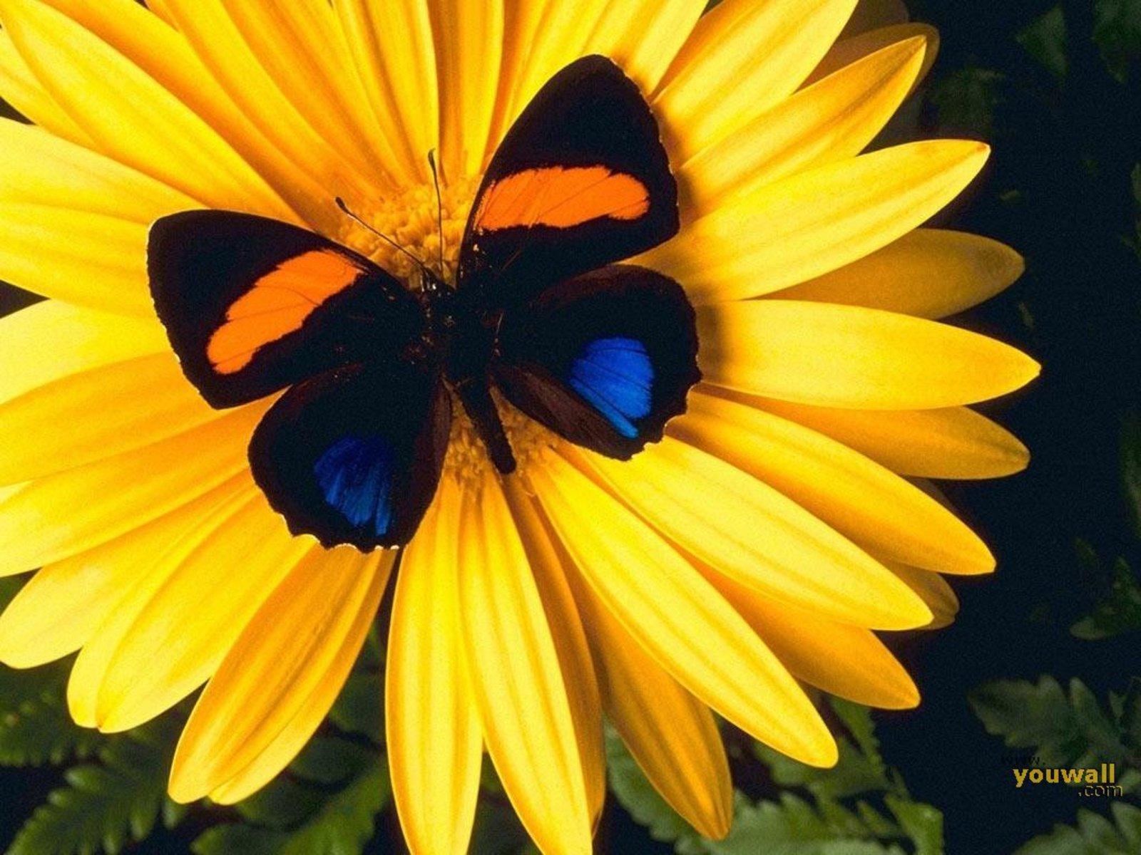 Beautiful Butterflies - Beautiful ...