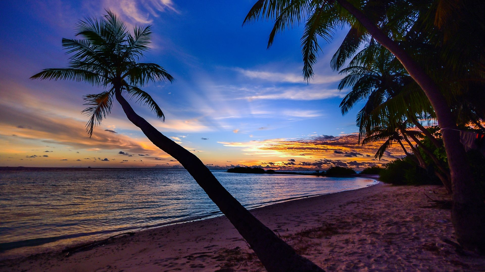 Beach Sunset Wallpaper - Palm Tree Beach Sunset - HD Wallpaper