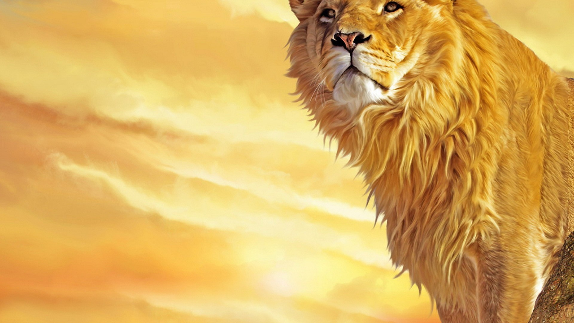 Lion Background 1920x1080 Wallpaper Teahub Io