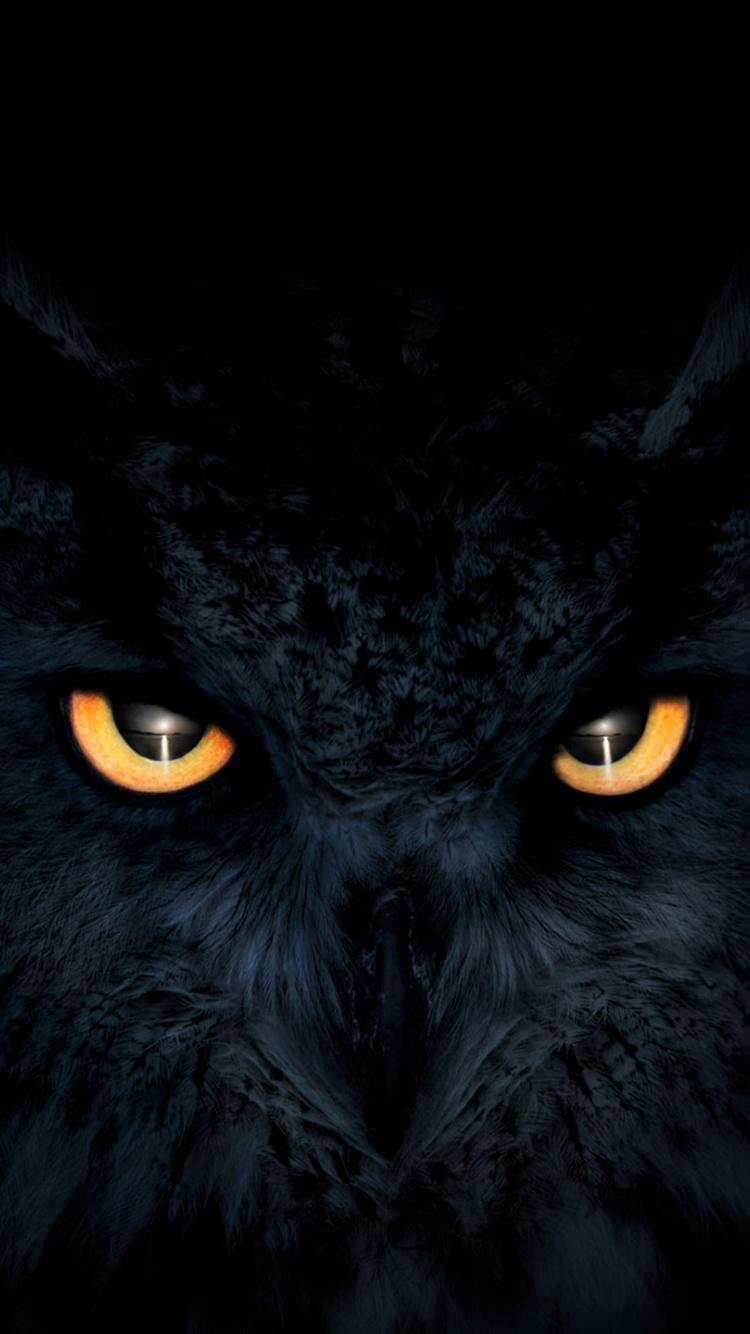 Owl Dark Glowing Eyes Muzzle Wallpaper Owl Wallpaper For Iphone 750x1334 Wallpaper Teahub Io
