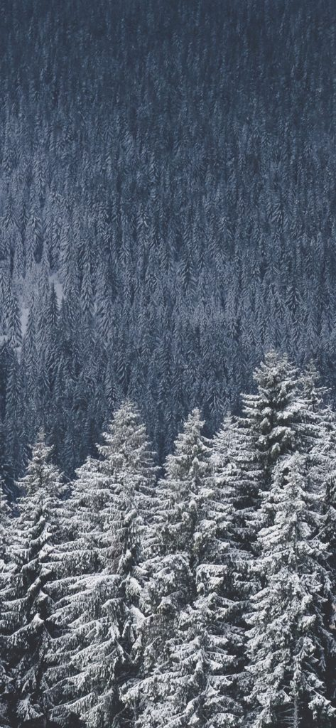 Winter Wallpaper Iphone X 473x1024 Wallpaper Teahub Io