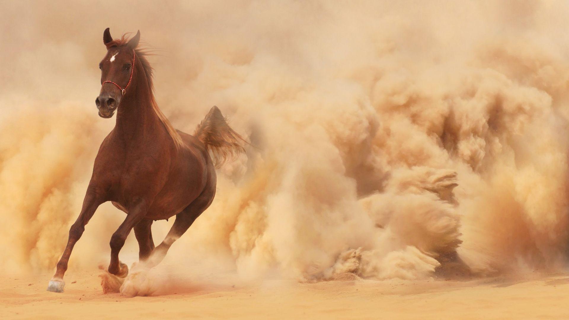 Running Horse Dust Cloud Wallpaper Horse Wallpaper Hd 1920x1080 Wallpaper Teahub Io