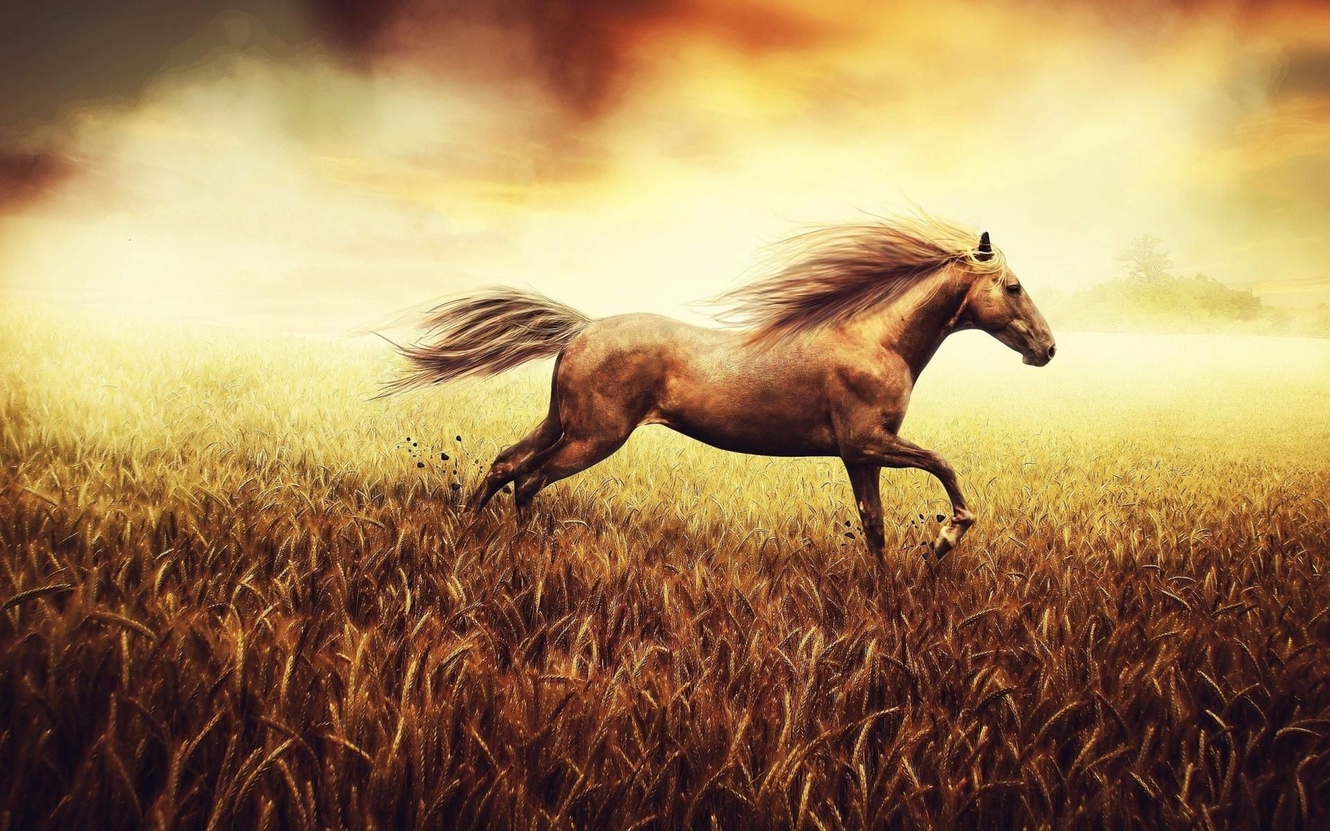 Running Horse Hd Wallpaper Running Horse Hd Wallpaper Way Of Life 432 Hz Hans Zimmer 1920x1200 Wallpaper Teahub Io
