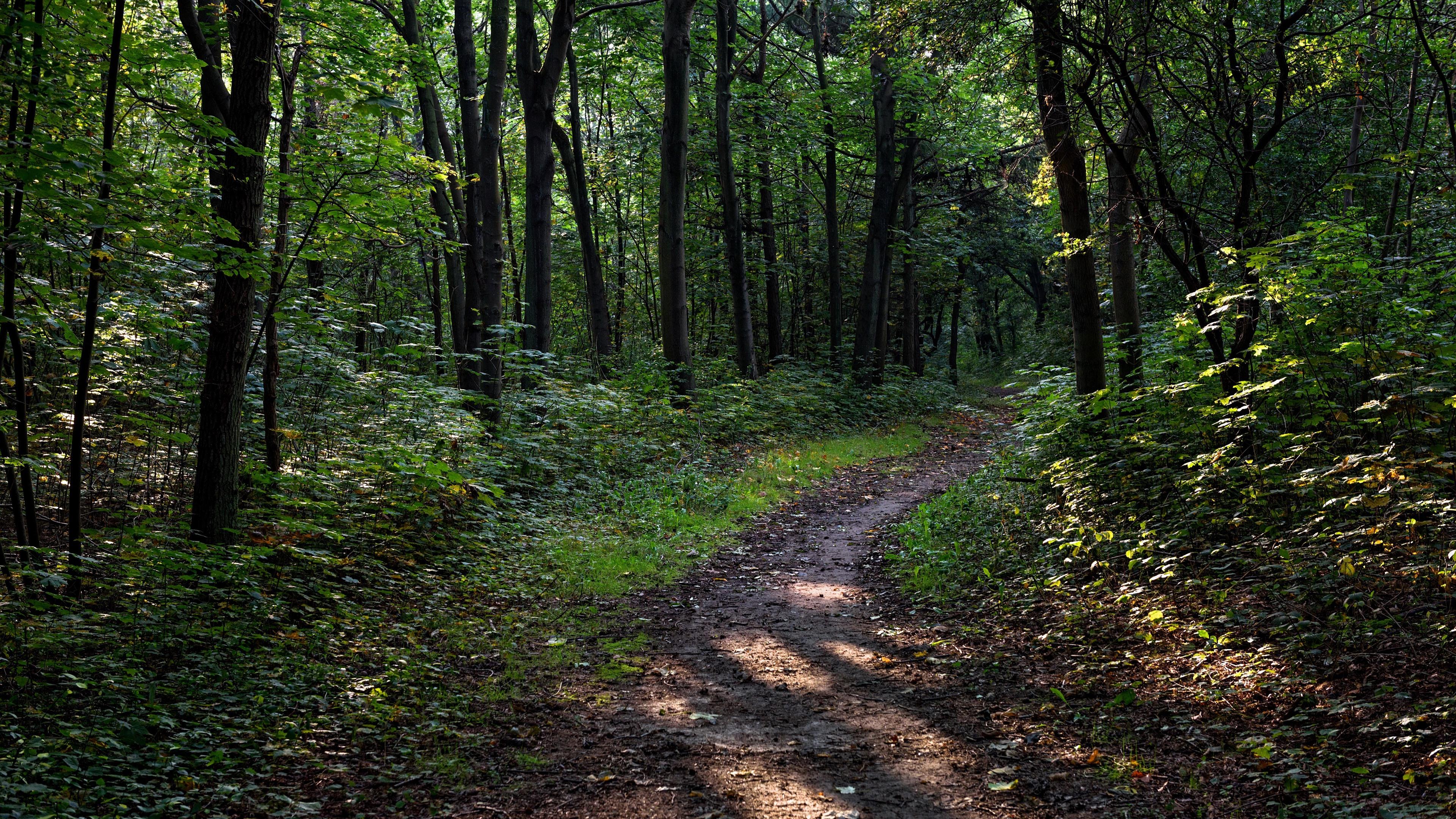 Wallpaper Trees Path Forest Nature Sendero En El Bosque 3840x2160 Wallpaper Teahub Io