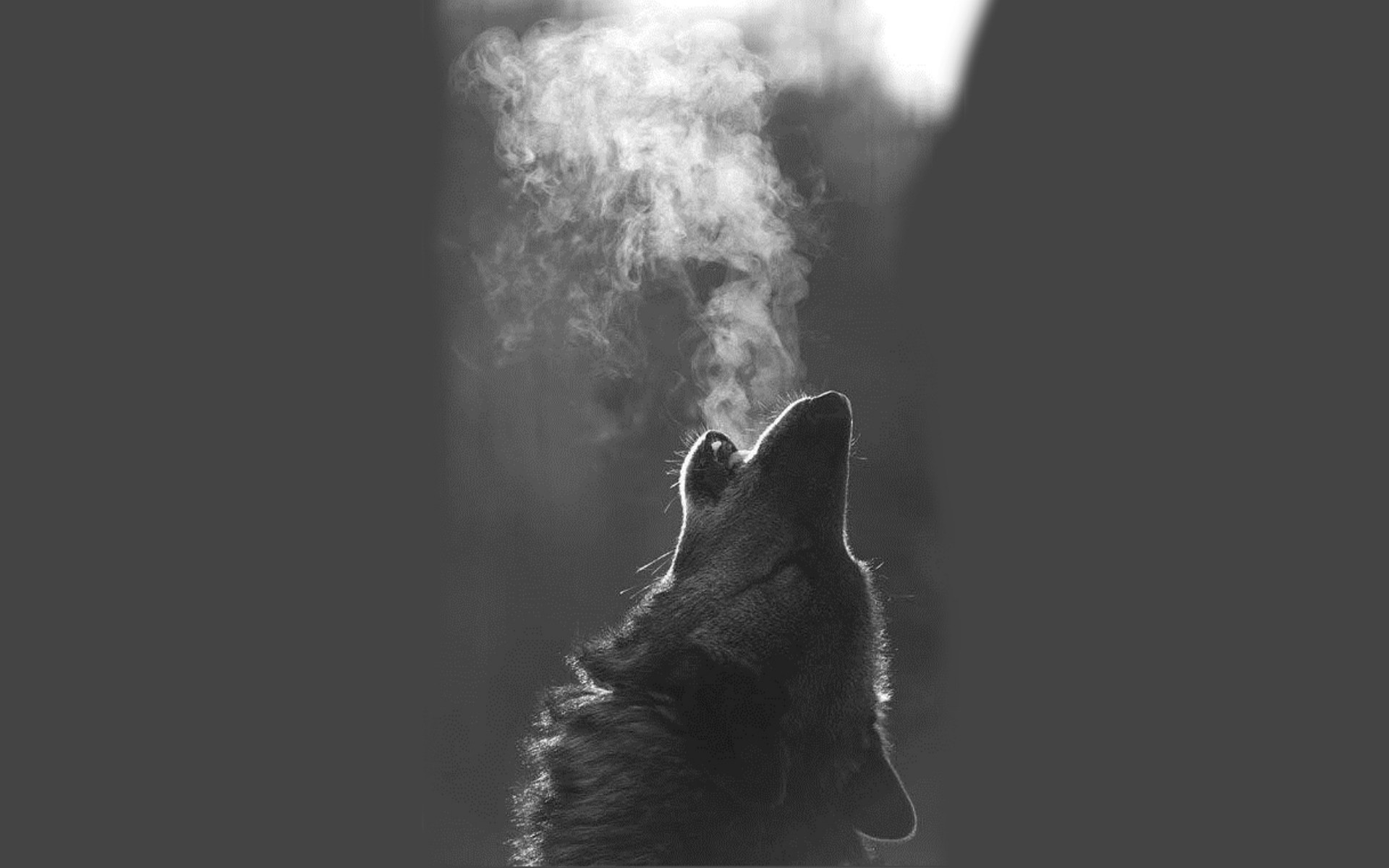 1920x1200 Monster Magical Animals Roar Fantasy Werewolf Howling Wolf Wallpaper 4k 1920x1200 Wallpaper Teahub Io