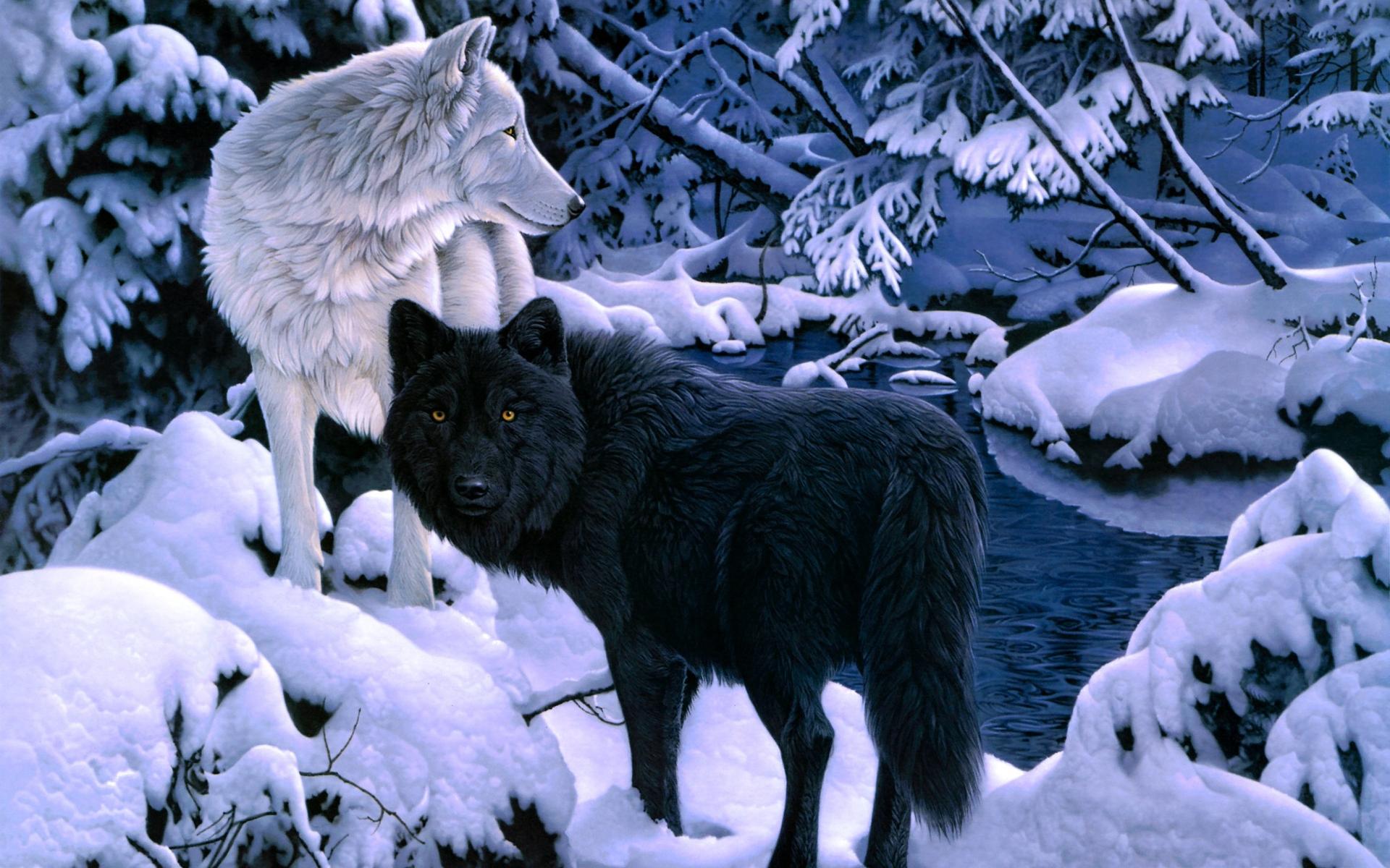 Dark Black And White Wolf 1920x1200 Wallpaper Teahub Io