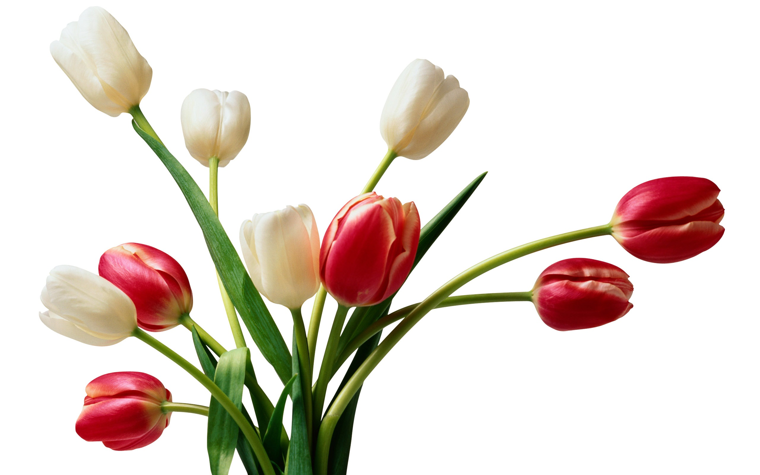 Flowers Wallpapers Hd Collection - Beautiful Flower Pictures Full Size - HD Wallpaper