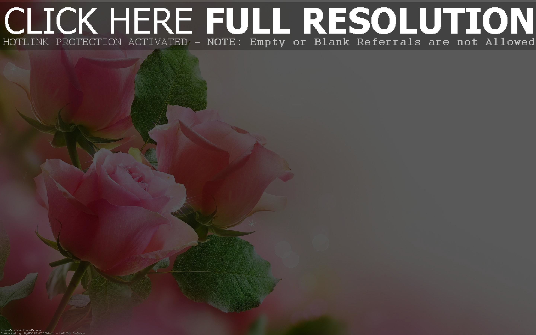 2880x1800, Hd Pink Rose Flowers Wallpaper Full Size - Warren Street Tube Station - HD Wallpaper