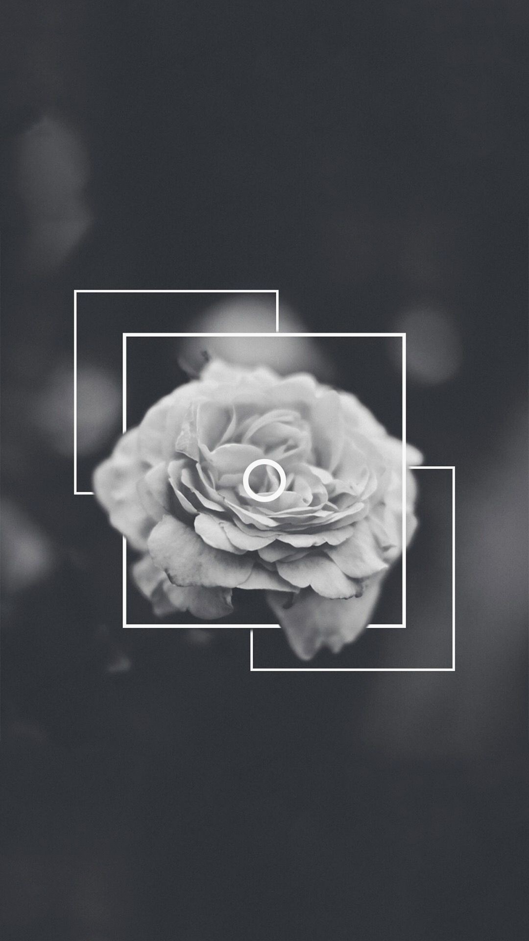 67 670758 black and white rose aesthetic